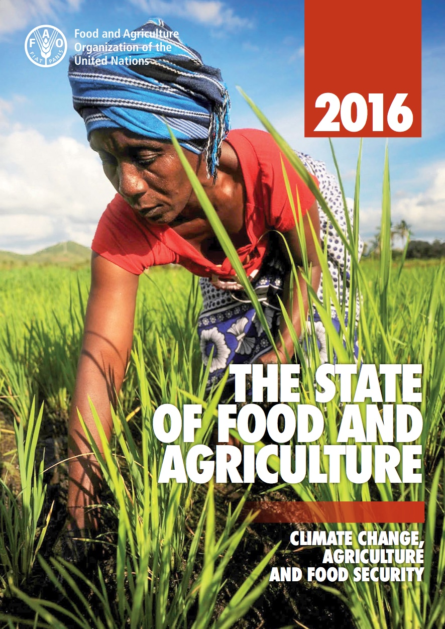 FAO Report Cover Page Image.jpeg