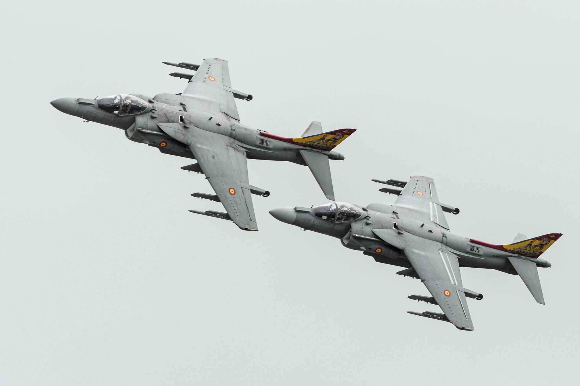 Spanish Harrier pair