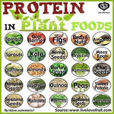 vegan-foods-beneficial-protein-in-plant-foodss.jpg