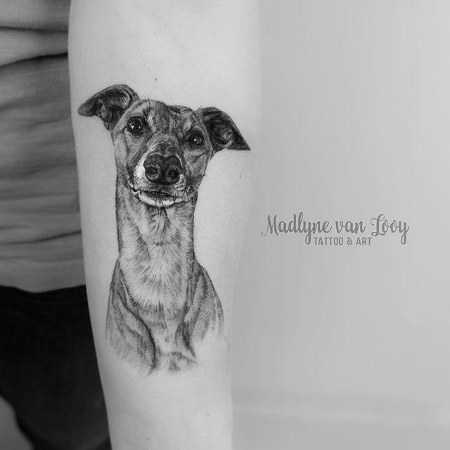 Dieses Whippet Tattoo habe ich beispielsweise black&grey im  Fineline  Stil gestochen