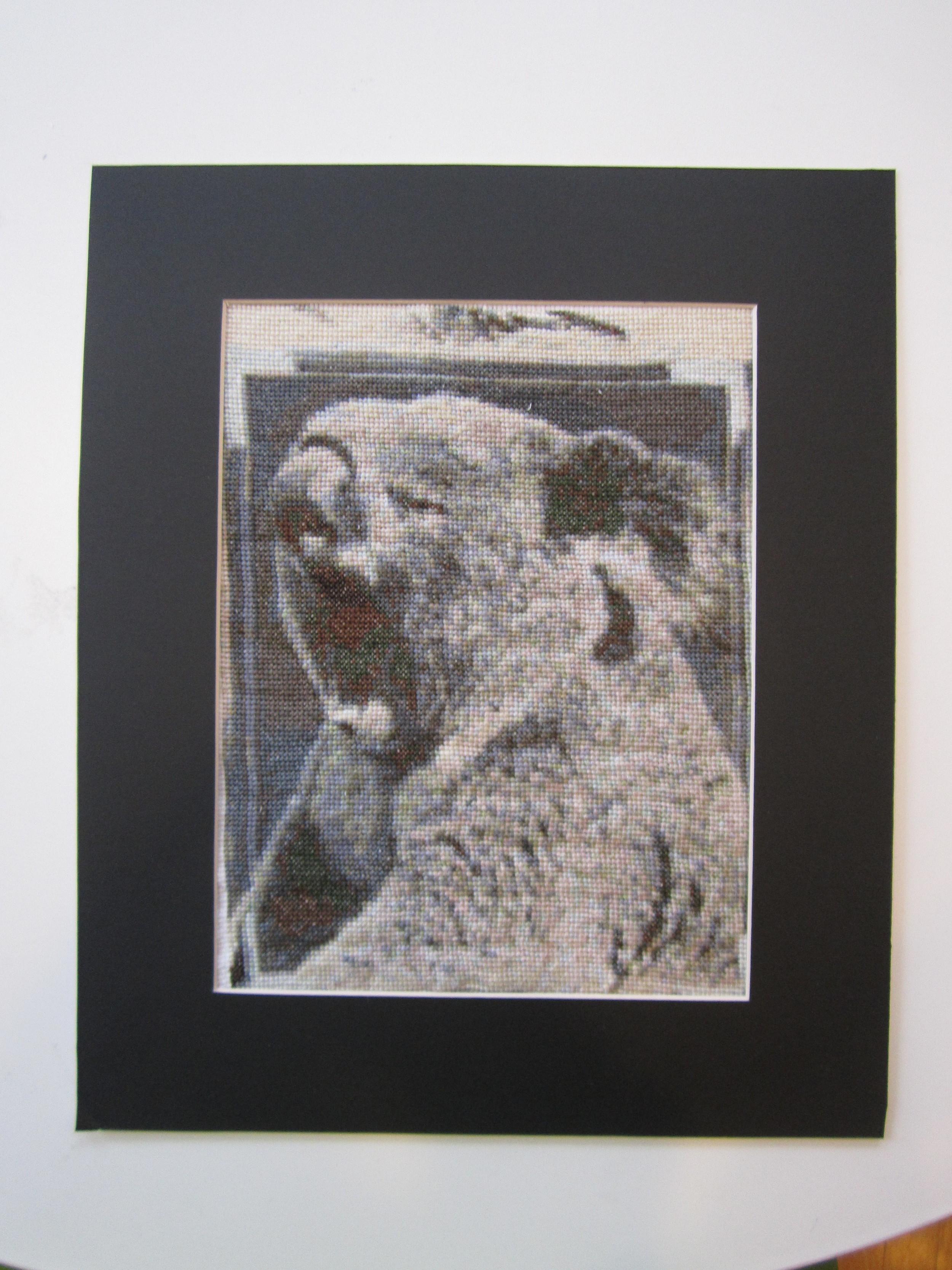 Koala 5.JPG
