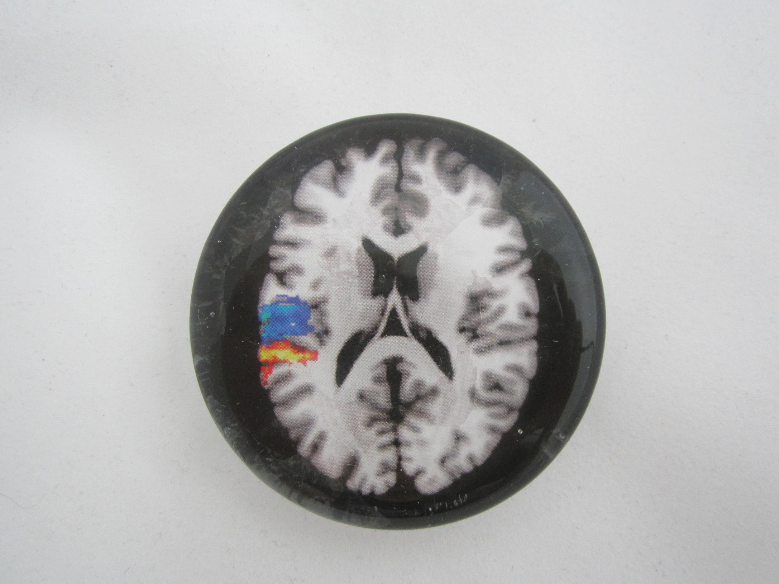 Brain Paperweight 1.JPG