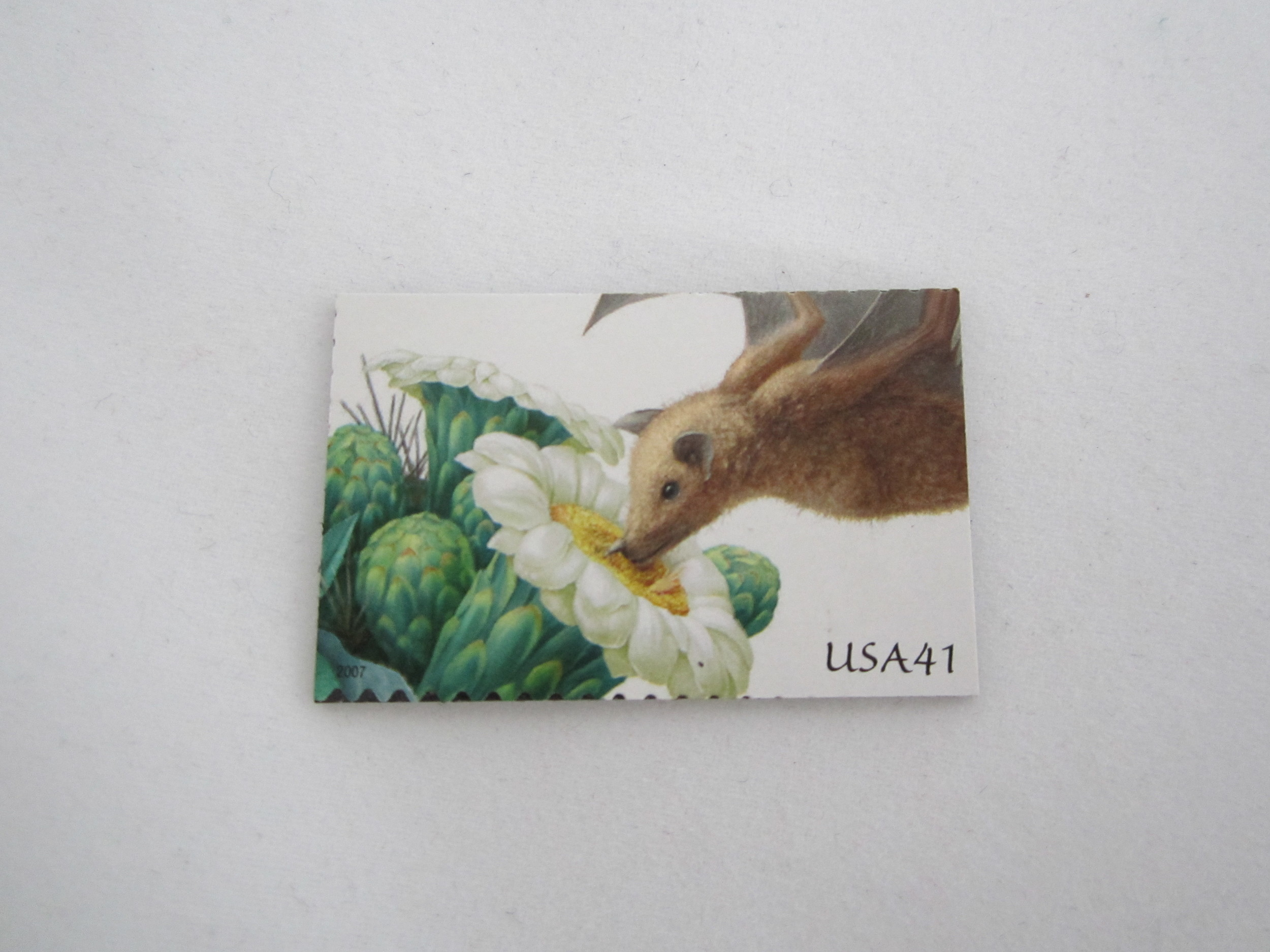 Fruit Bat Stamp Magnet 2.JPG
