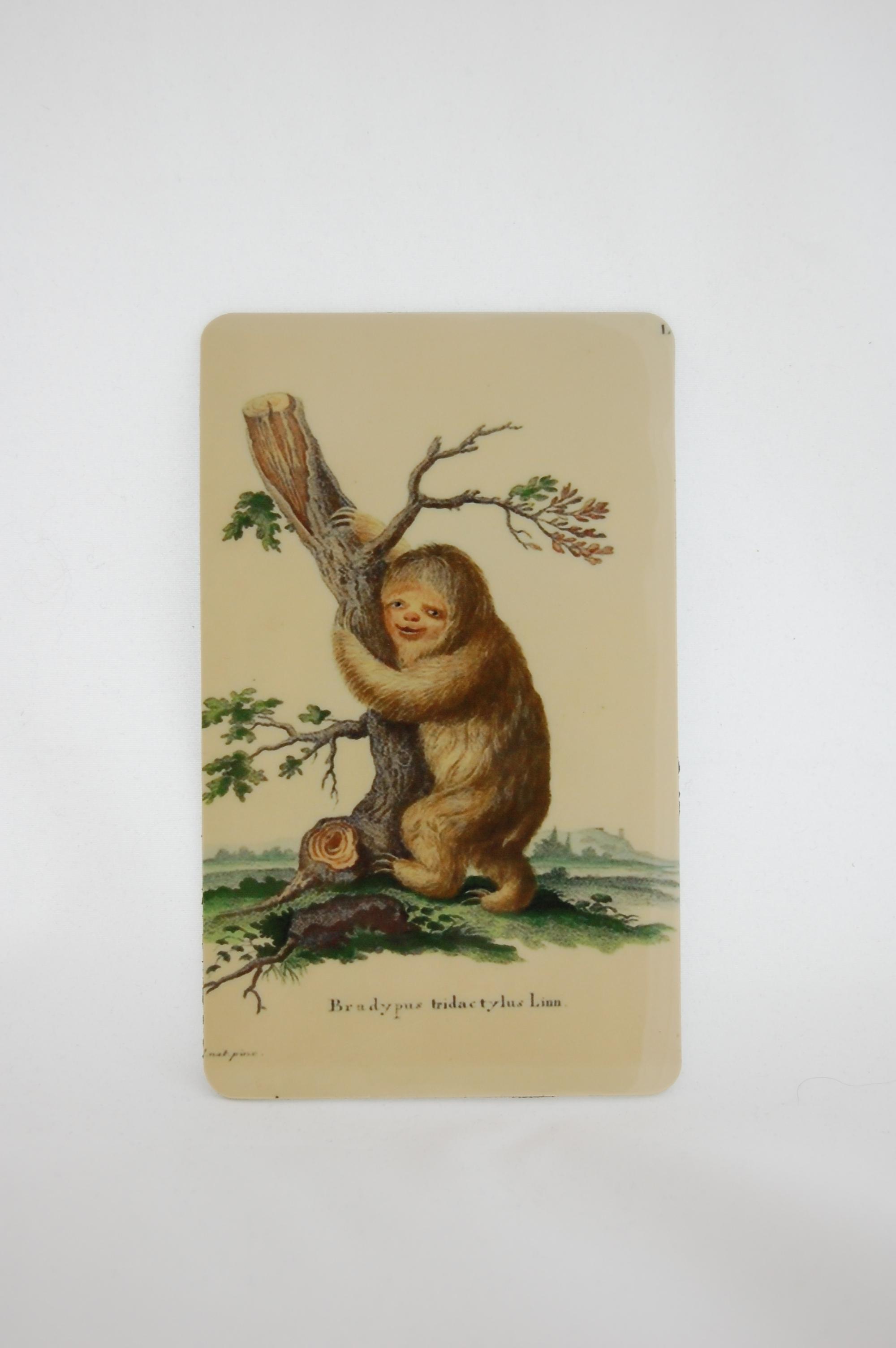 Funny Face Sloth Magnet 2.JPG
