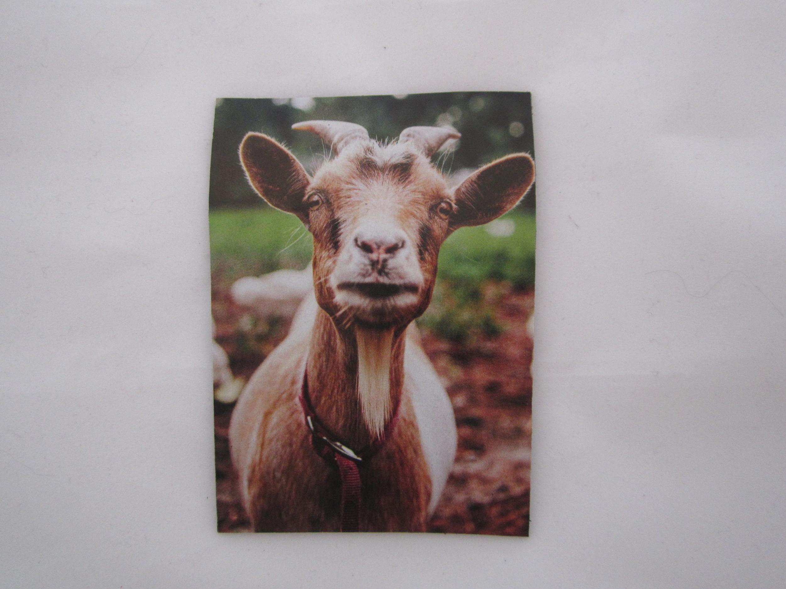 Goat Magnet 2.JPG