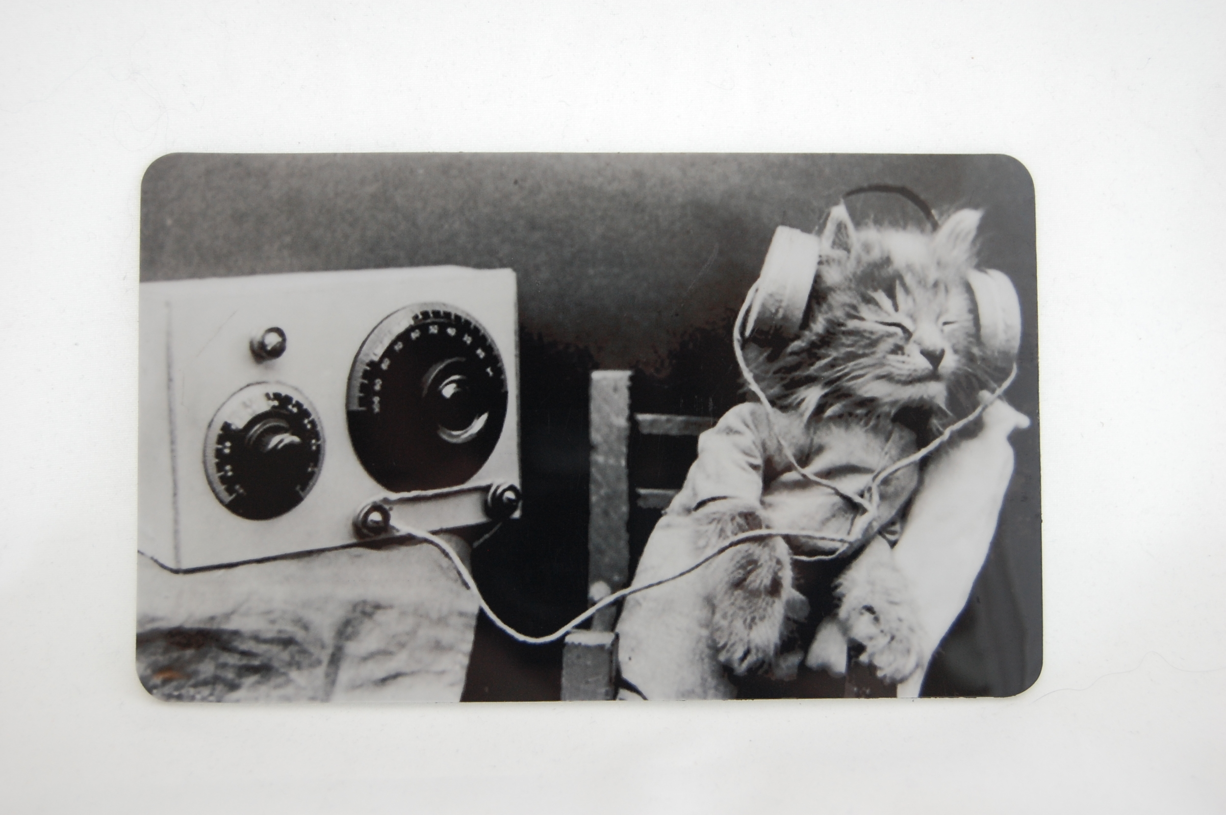 Kitten Headphones Magnet 1.JPG