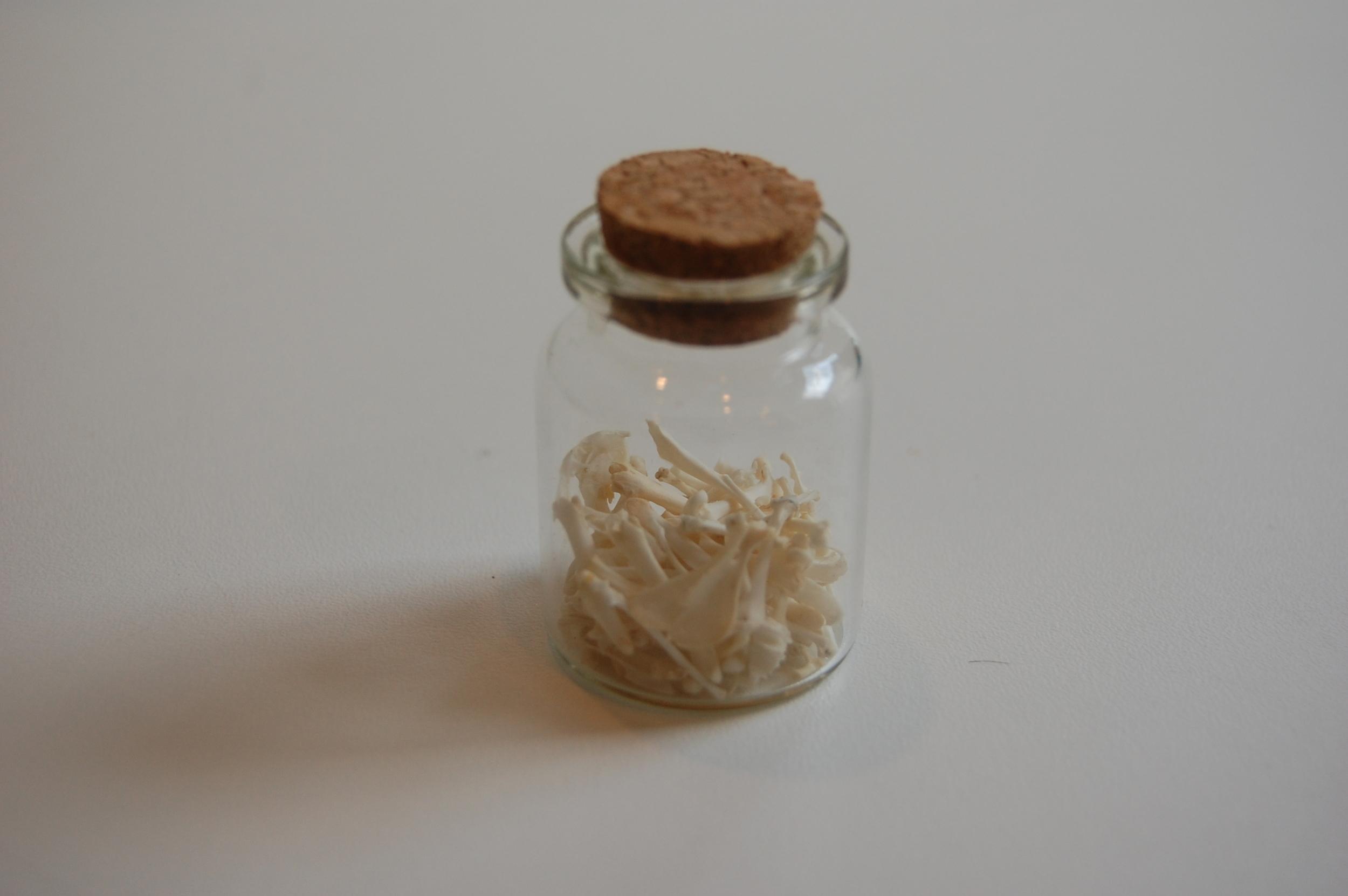 Jar of Owl Pellet Bones 9.JPG