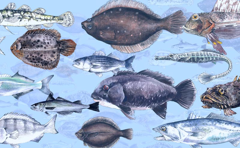 great-fish-count_800x494.jpg