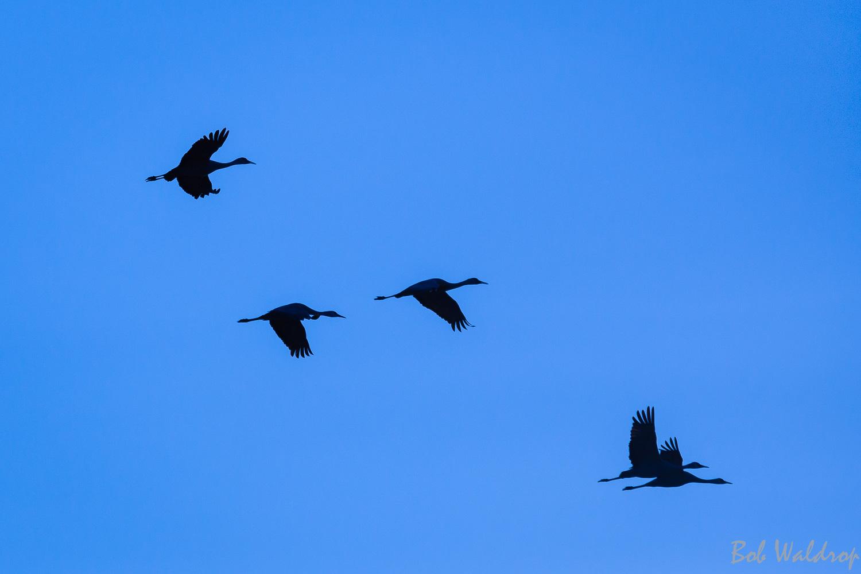 Website Birds-.JPG