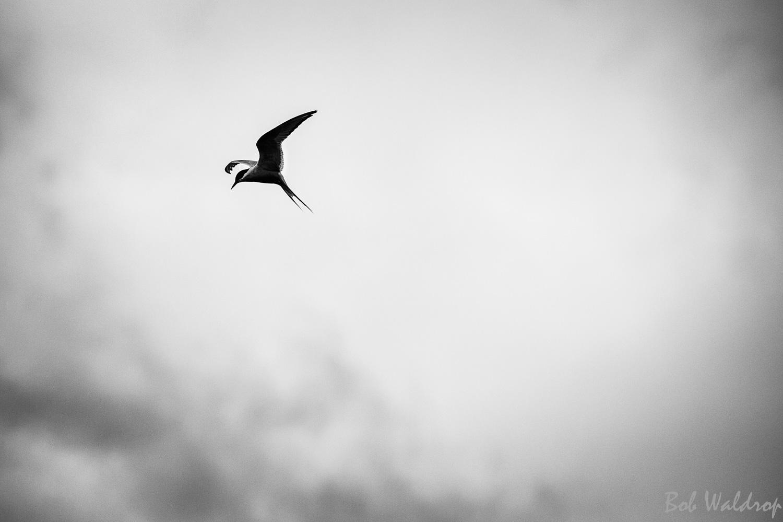 Website Birds--2.JPG