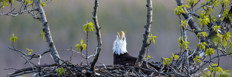 Website Birds--4.JPG