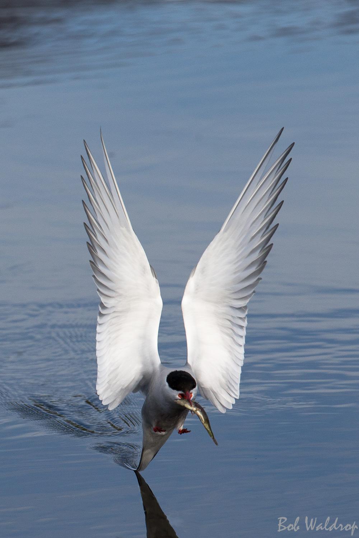 Website Birds--5.JPG