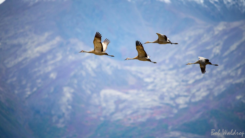 Website Birds-0228.JPG