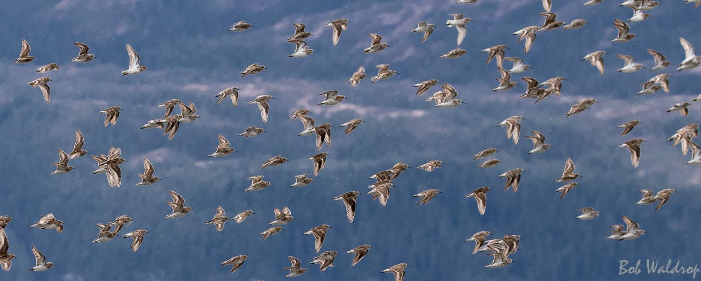 Website Birds-1375.JPG