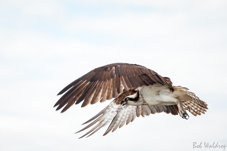 Website Birds-1665.JPG