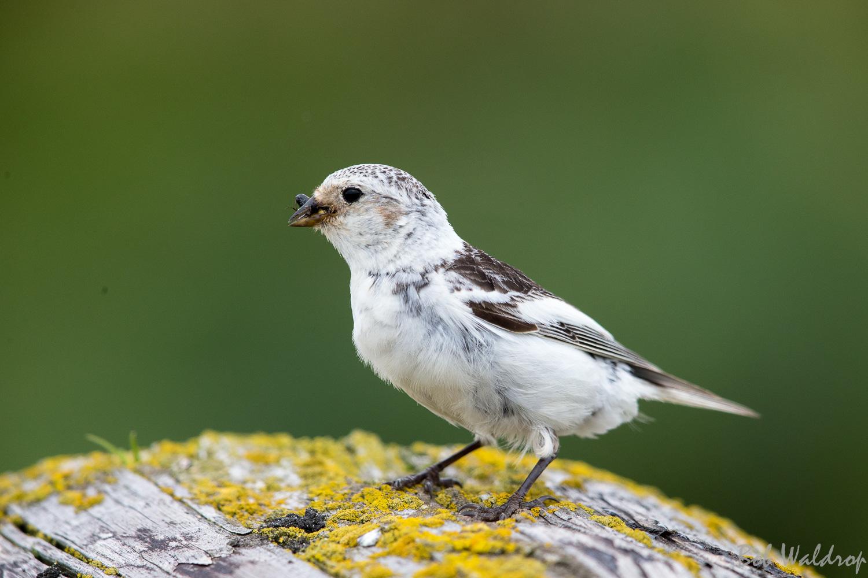 Website Birds-3054.JPG
