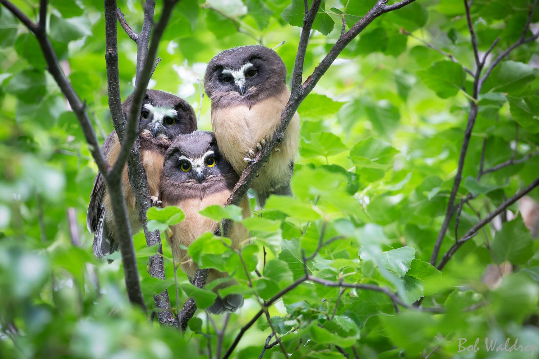 Website Birds-6490.JPG