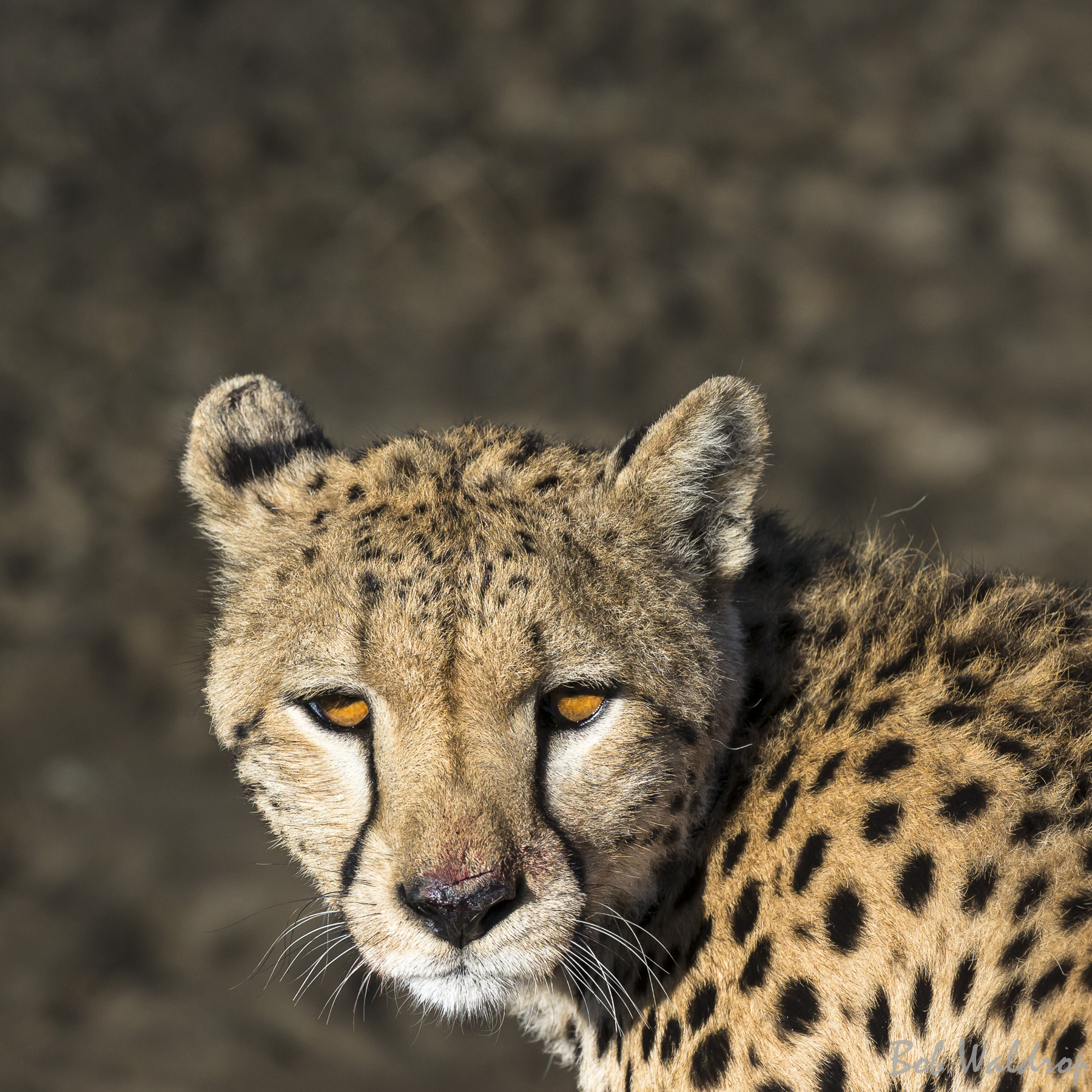 Wildlife-92609260.JPG