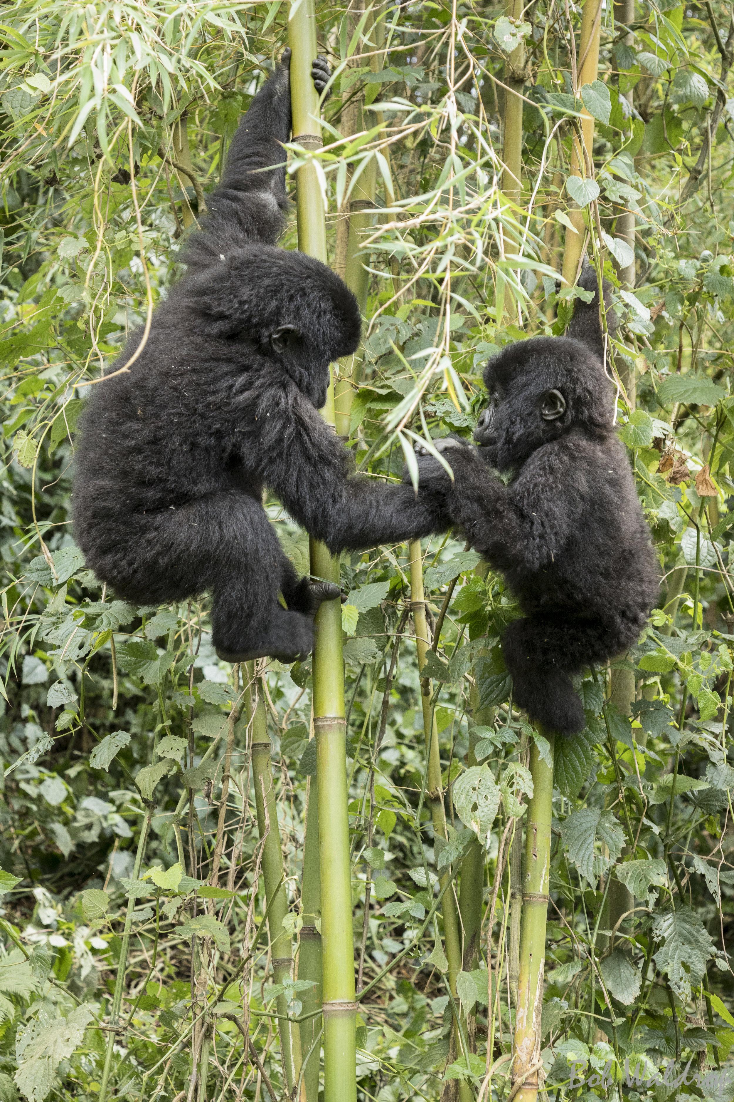 Rwanda-0266.JPG