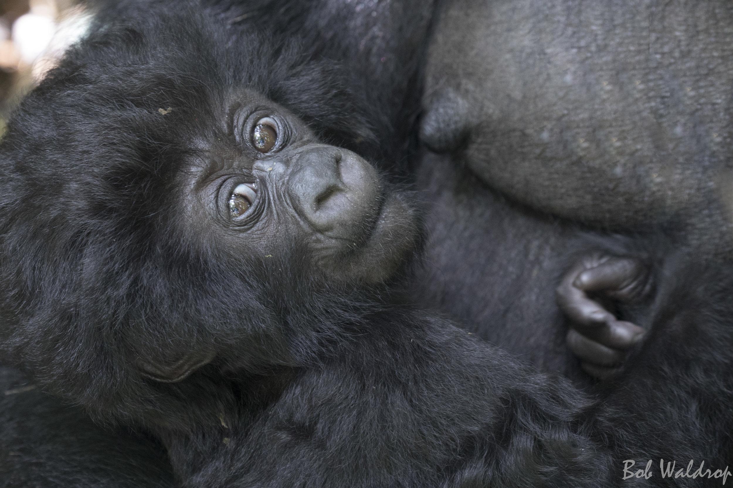 Rwanda-5944-Edit.JPG