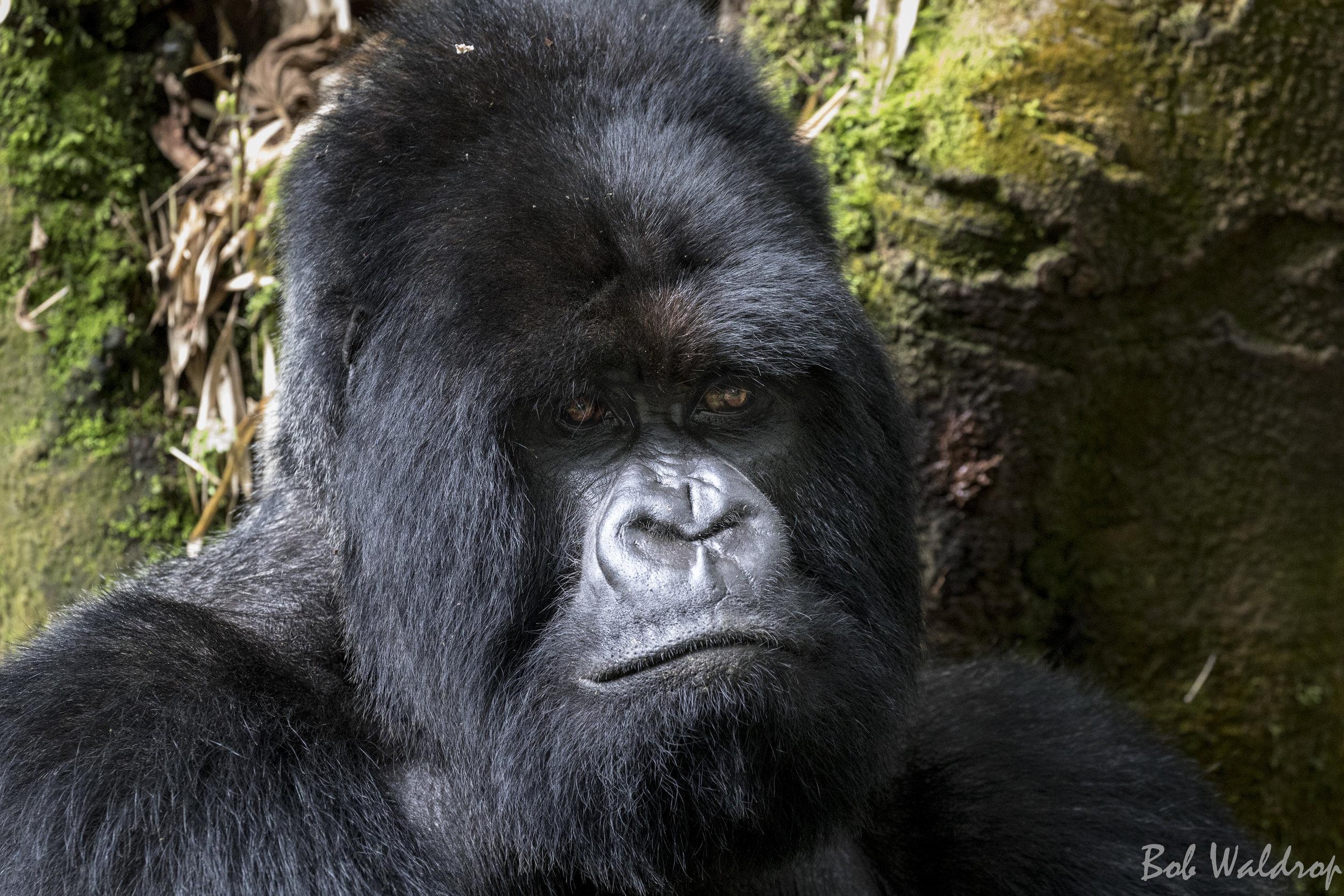 Rwanda-6152.JPG