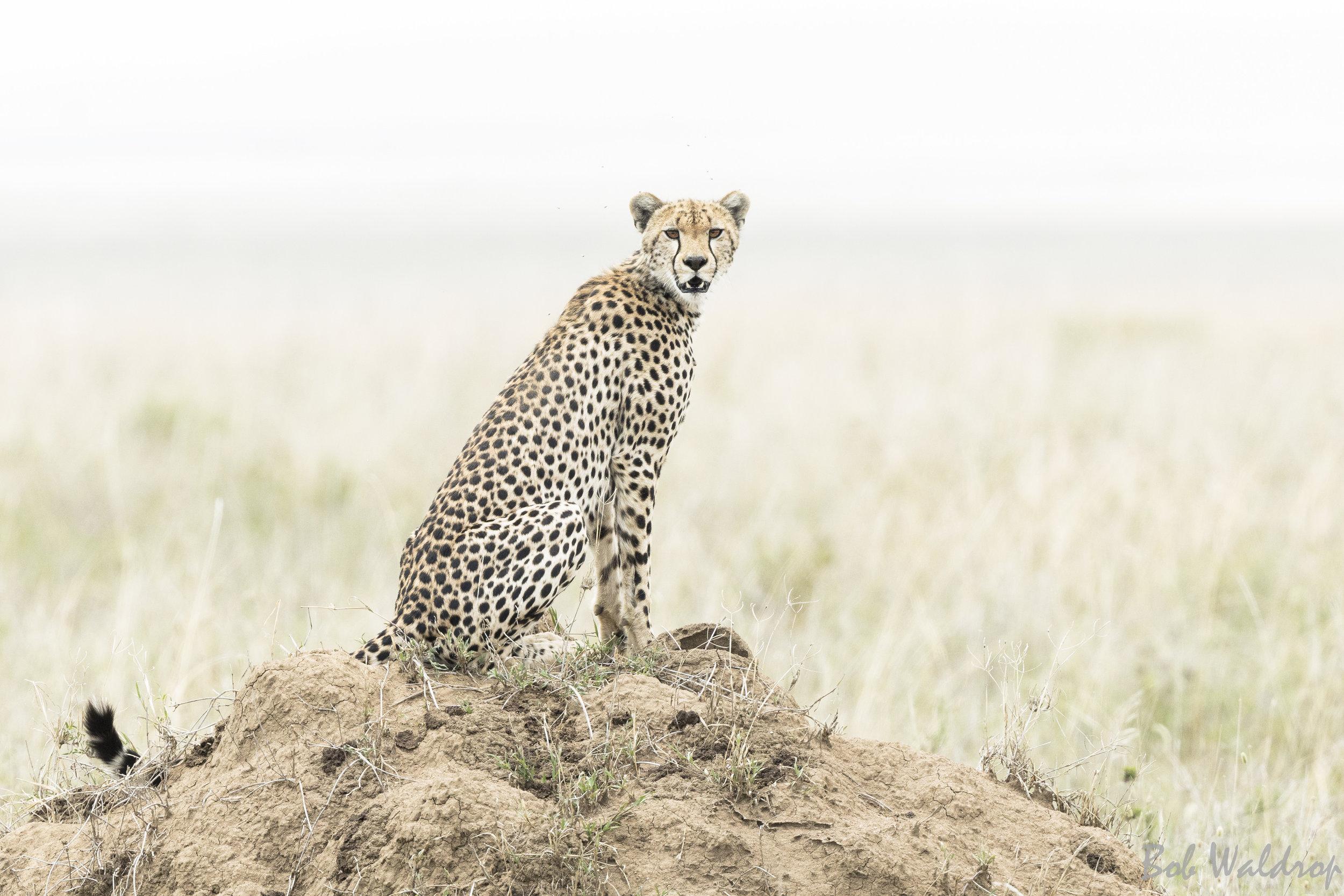 Serengeti-0148.JPG