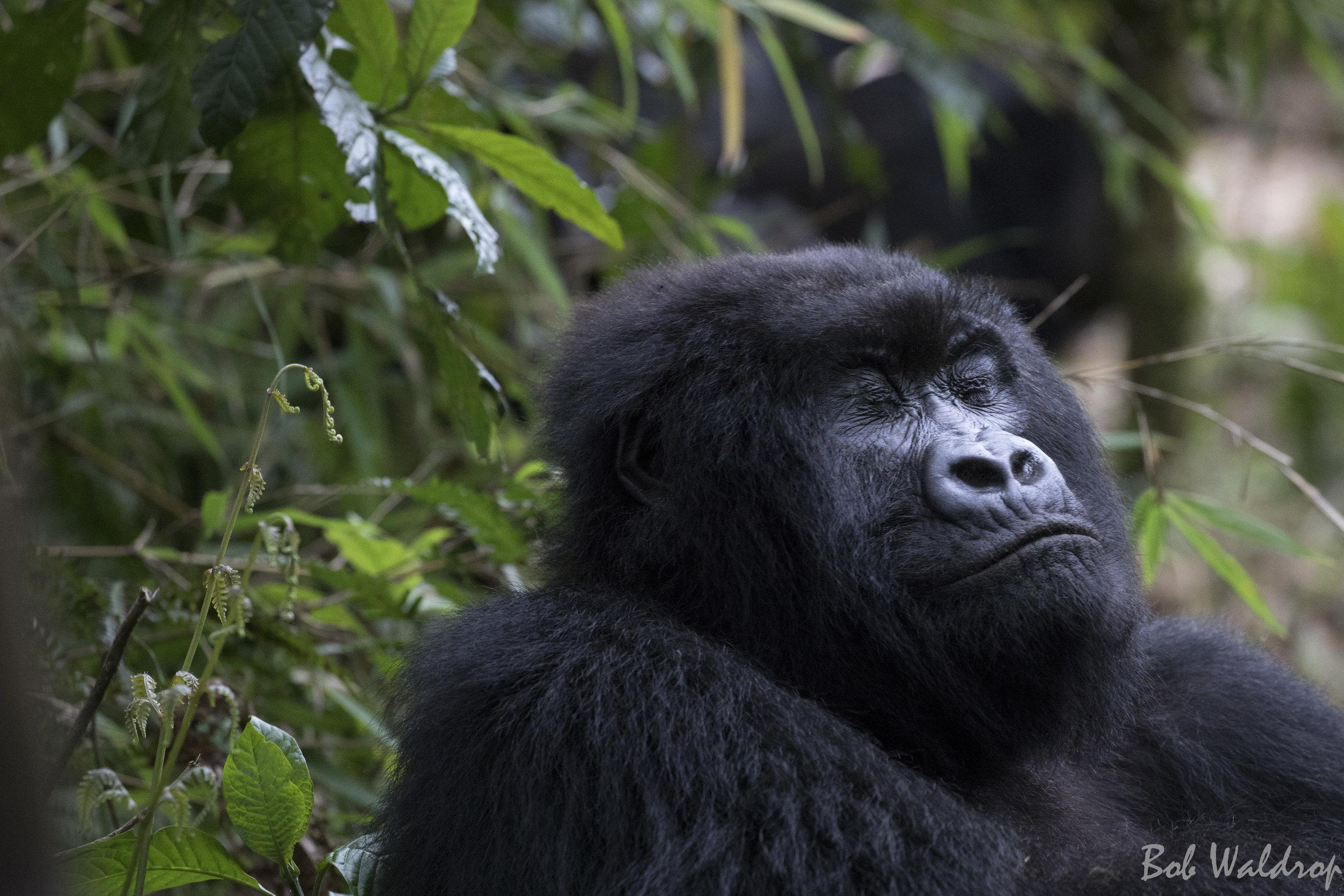 Rwanda-6250.JPG