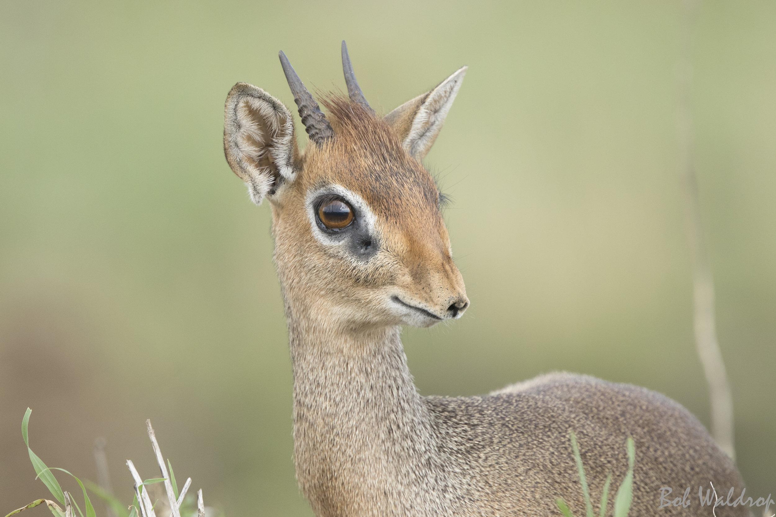 Serengeti-0455.JPG