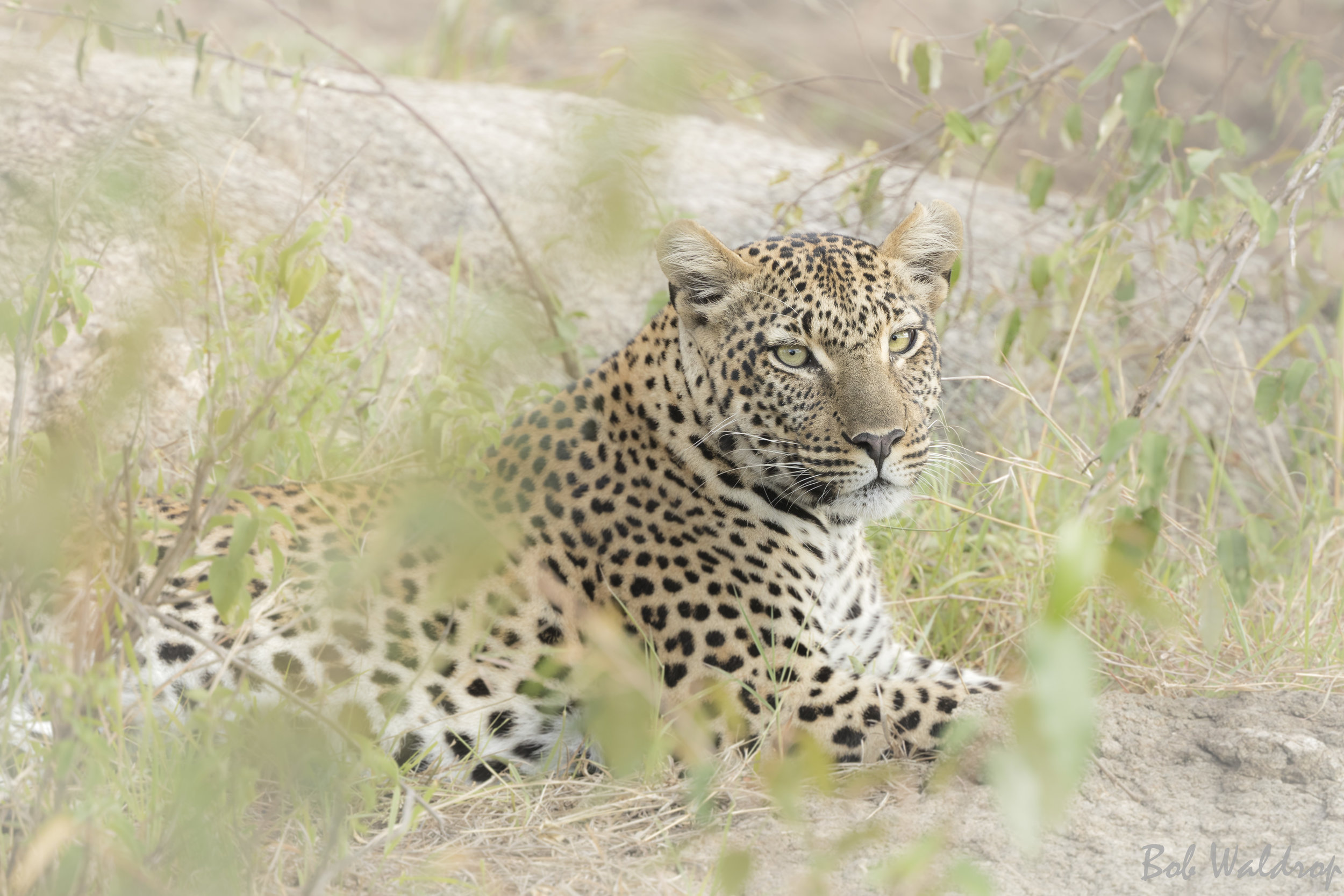 Serengeti-1295.JPG