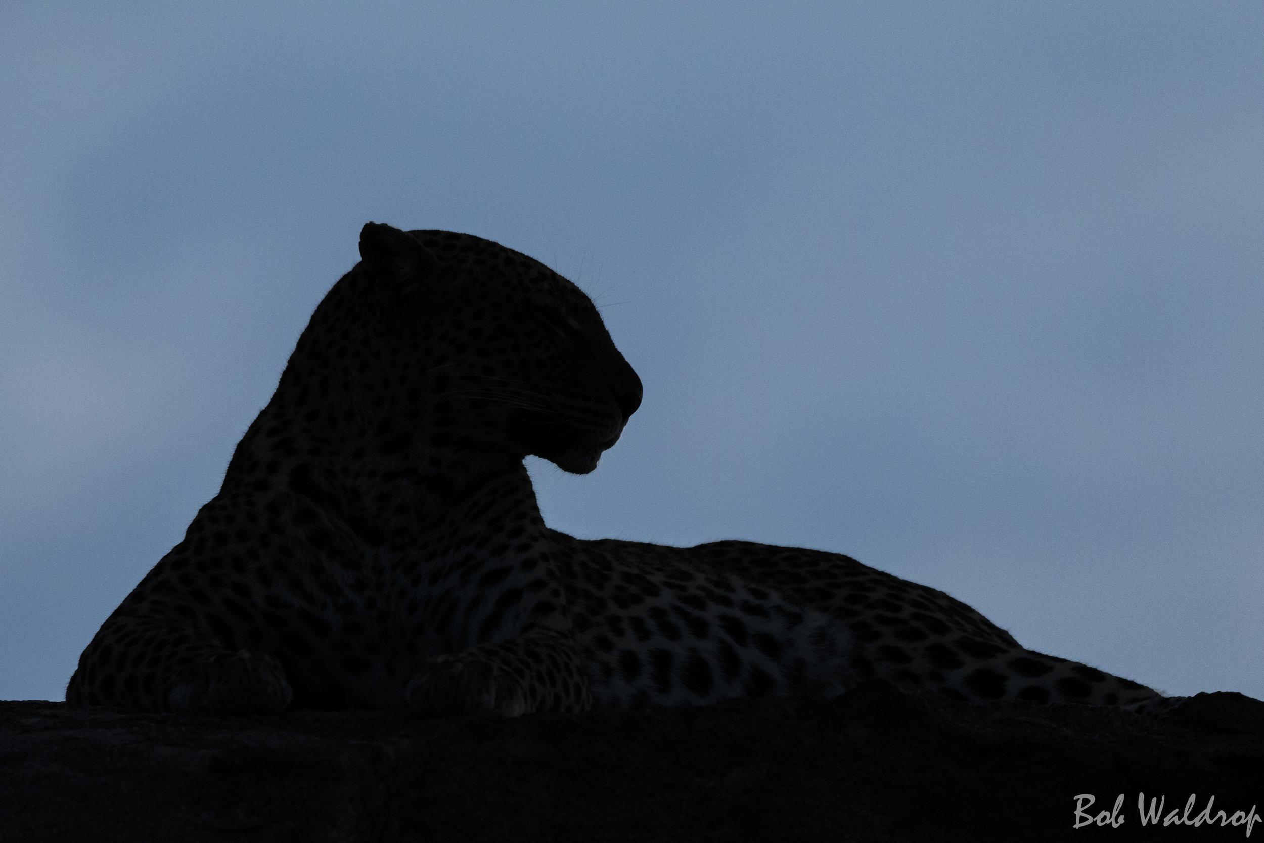 Serengeti-1007-Edit.JPG