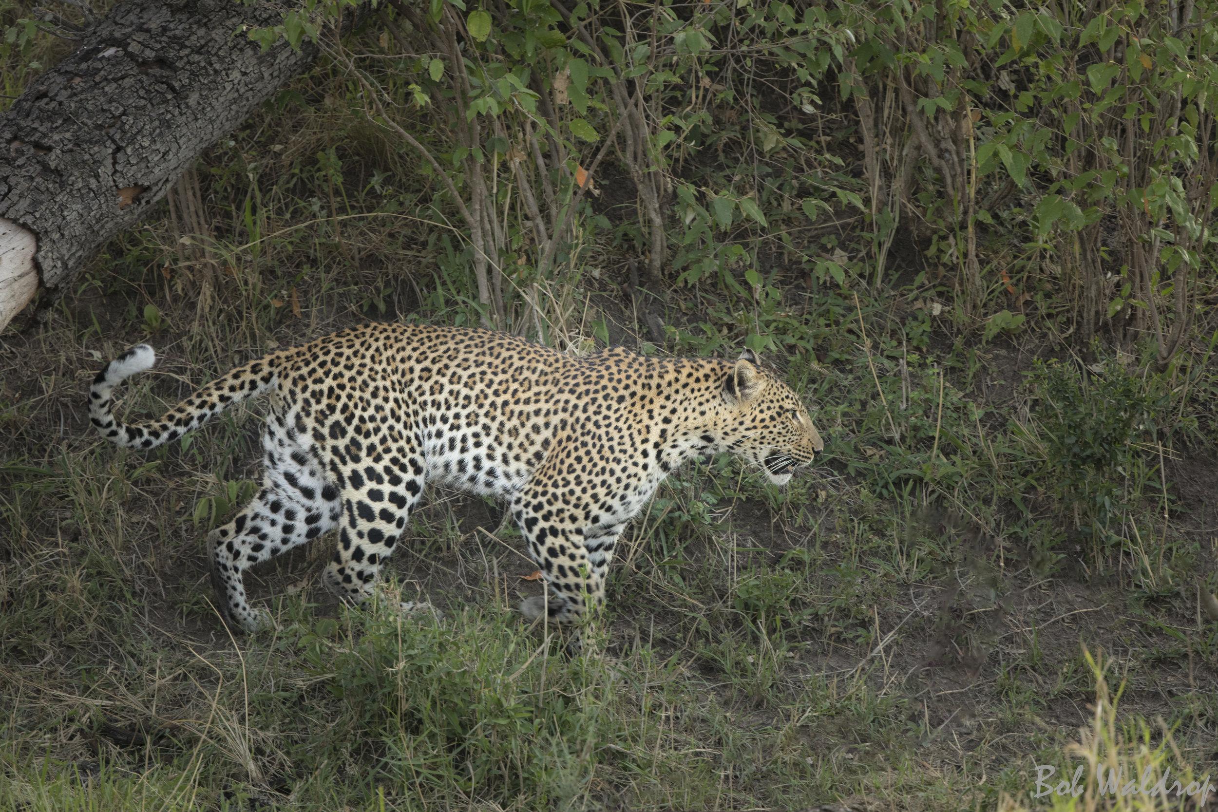 Serengeti-1348-Edit.JPG