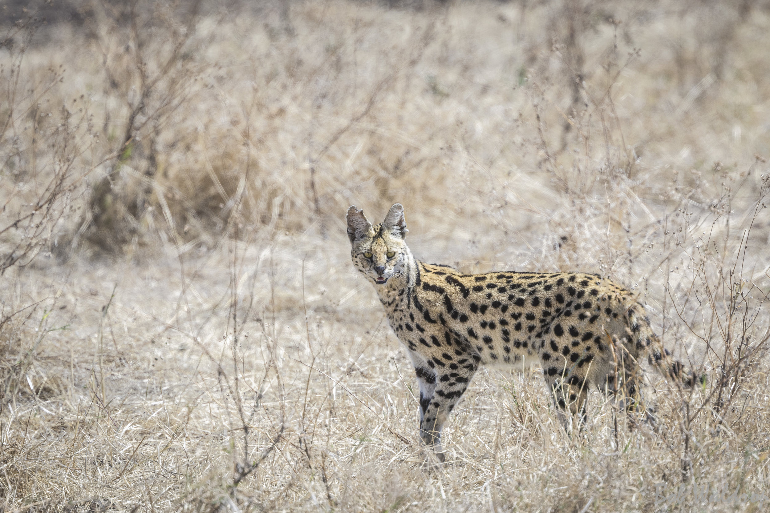 Serengeti-1435-2-2-Edit.JPG