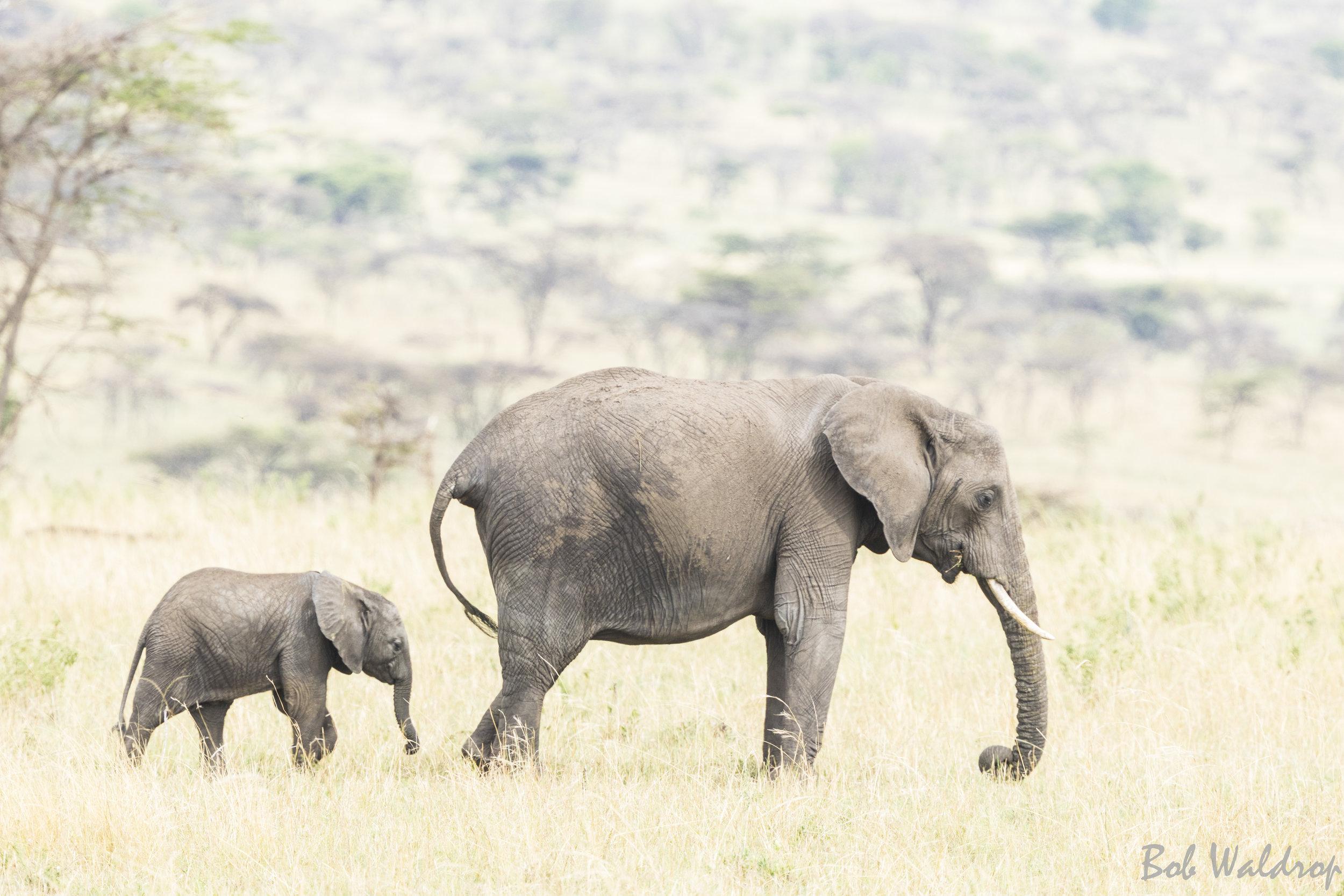 Serengeti-1706.JPG
