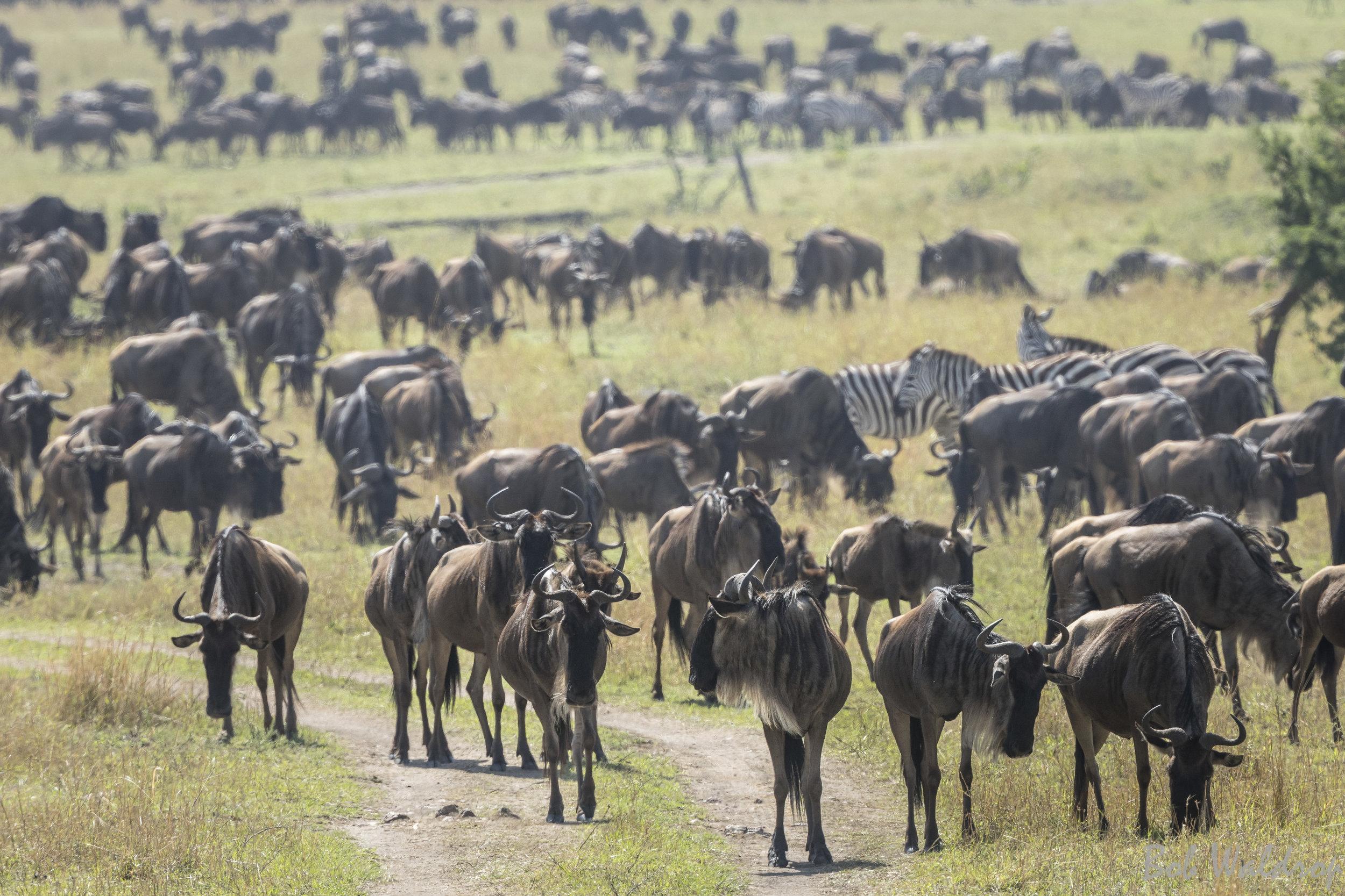 Serengeti-1626.JPG