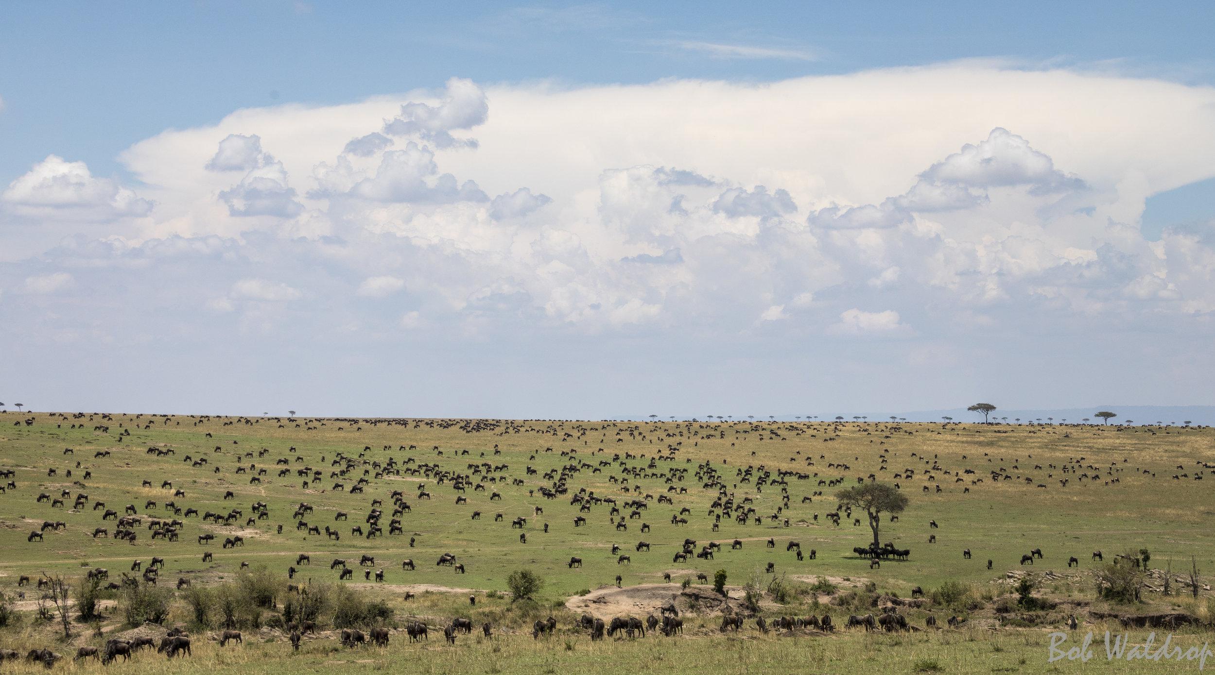 Serengeti-7304-Pano.JPG