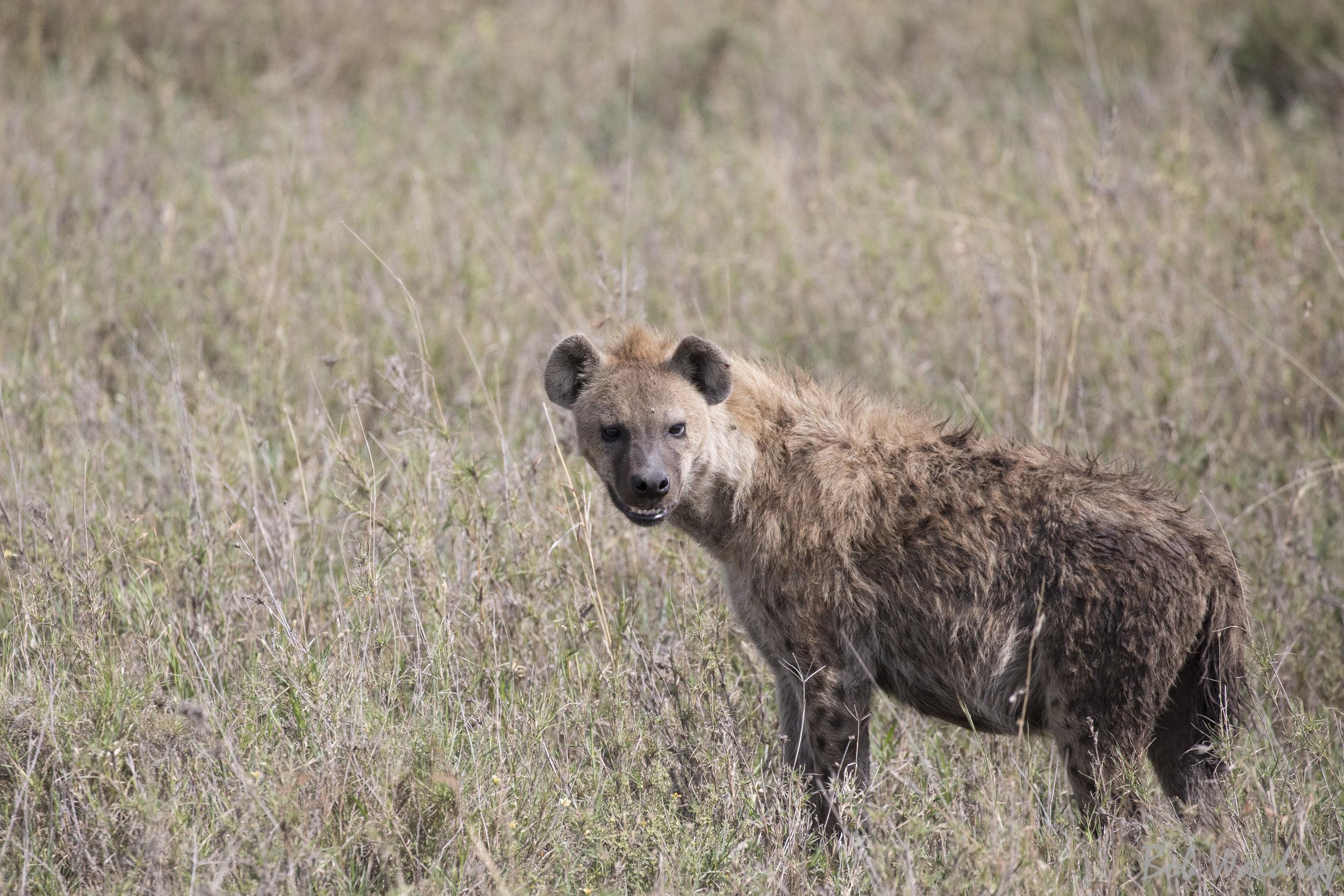 Serengeti-8068.JPG