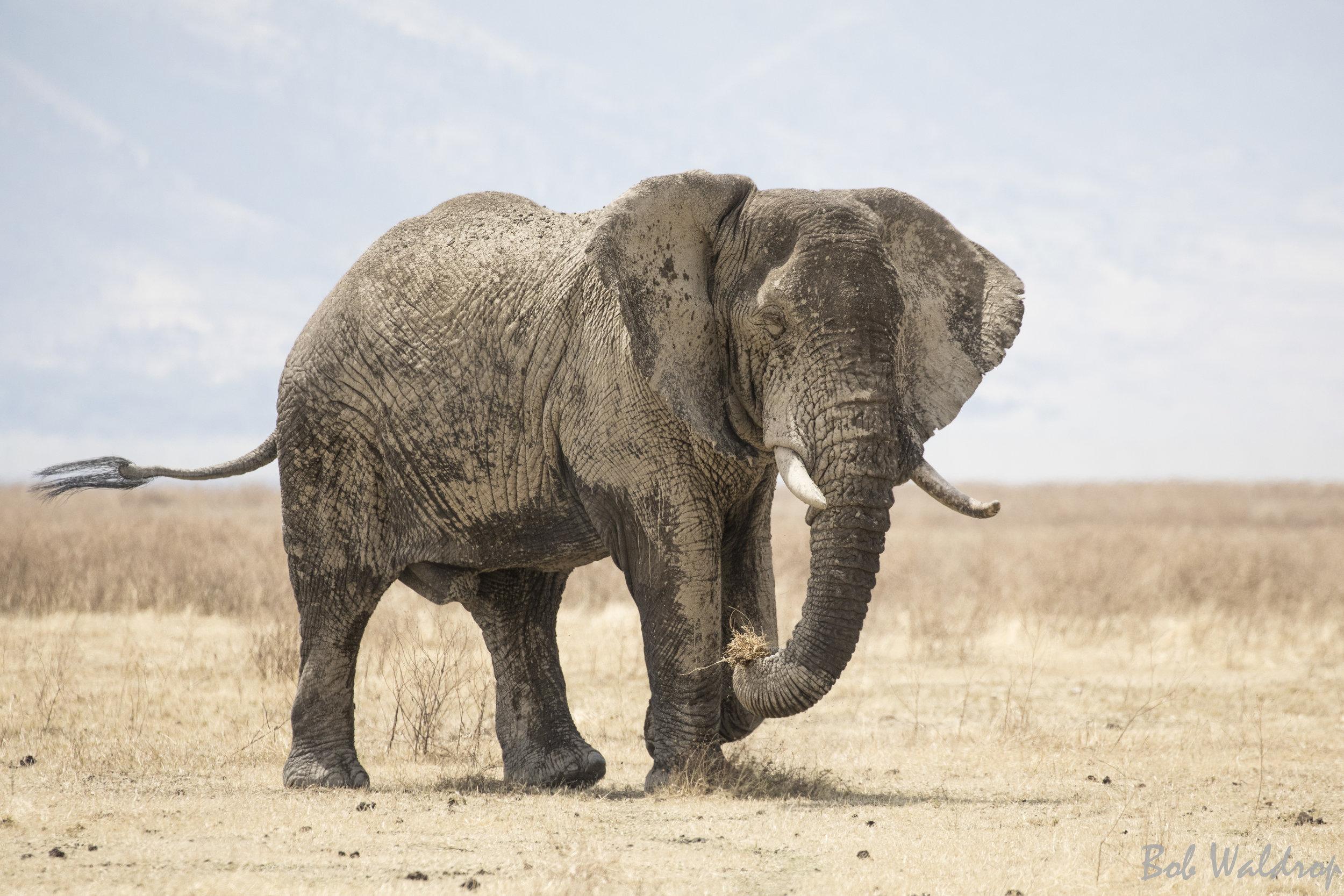 Serengeti-8538.JPG