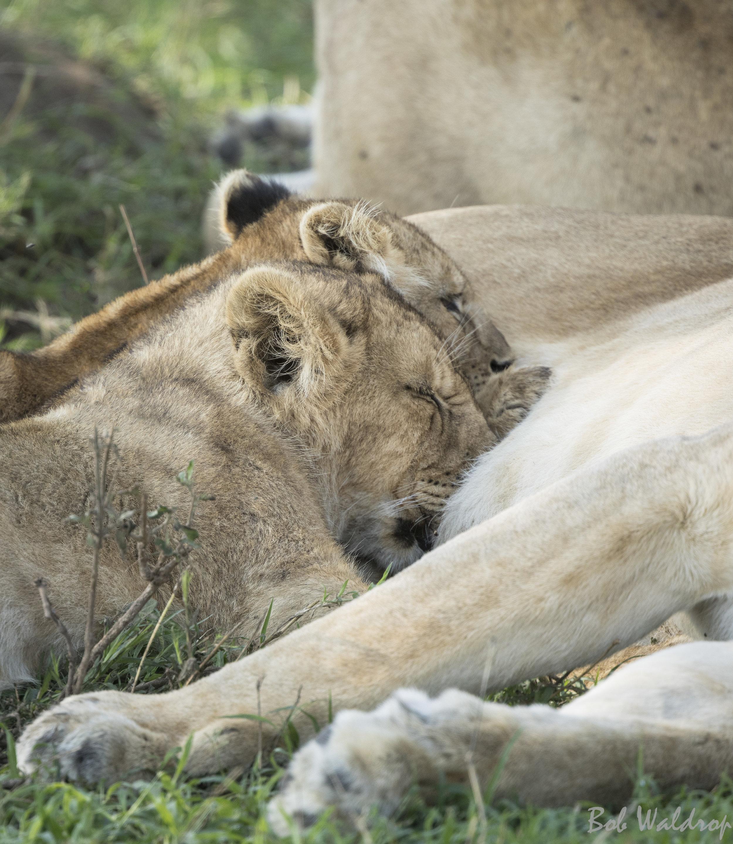Serengeti-9937-Edit.JPG