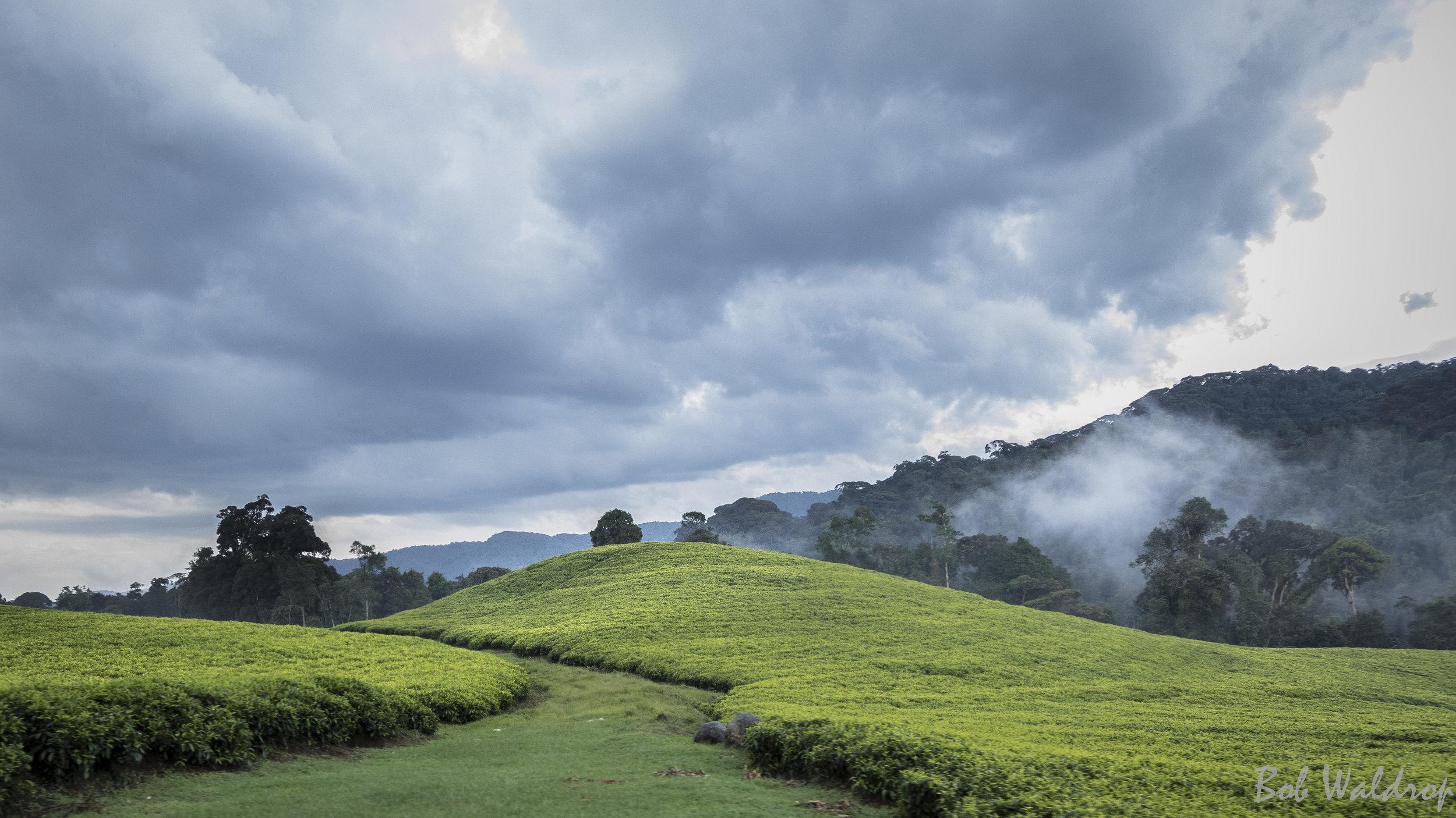 Rwanda-0025.JPG
