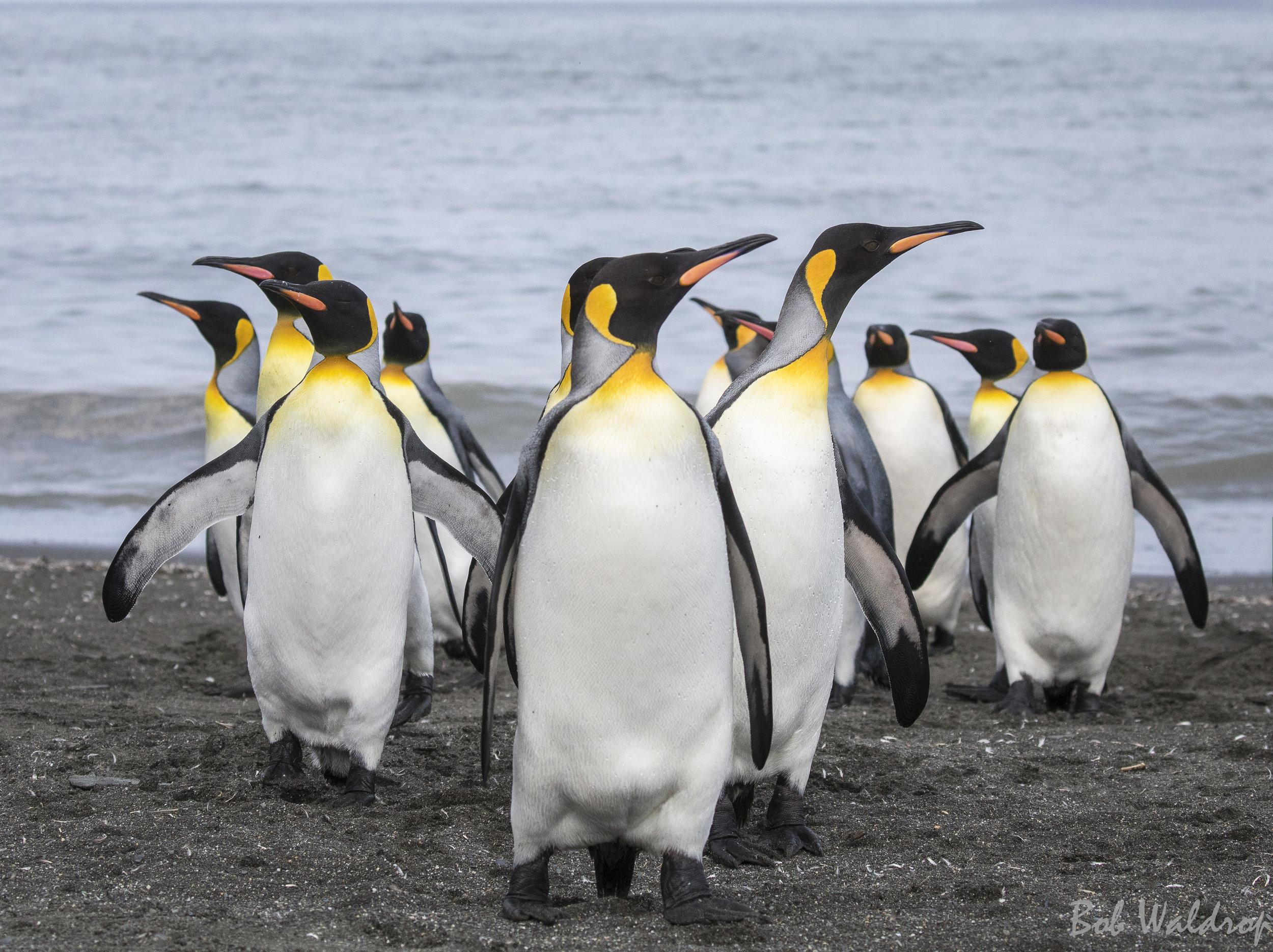 Antarctica-0700-Edit.JPG