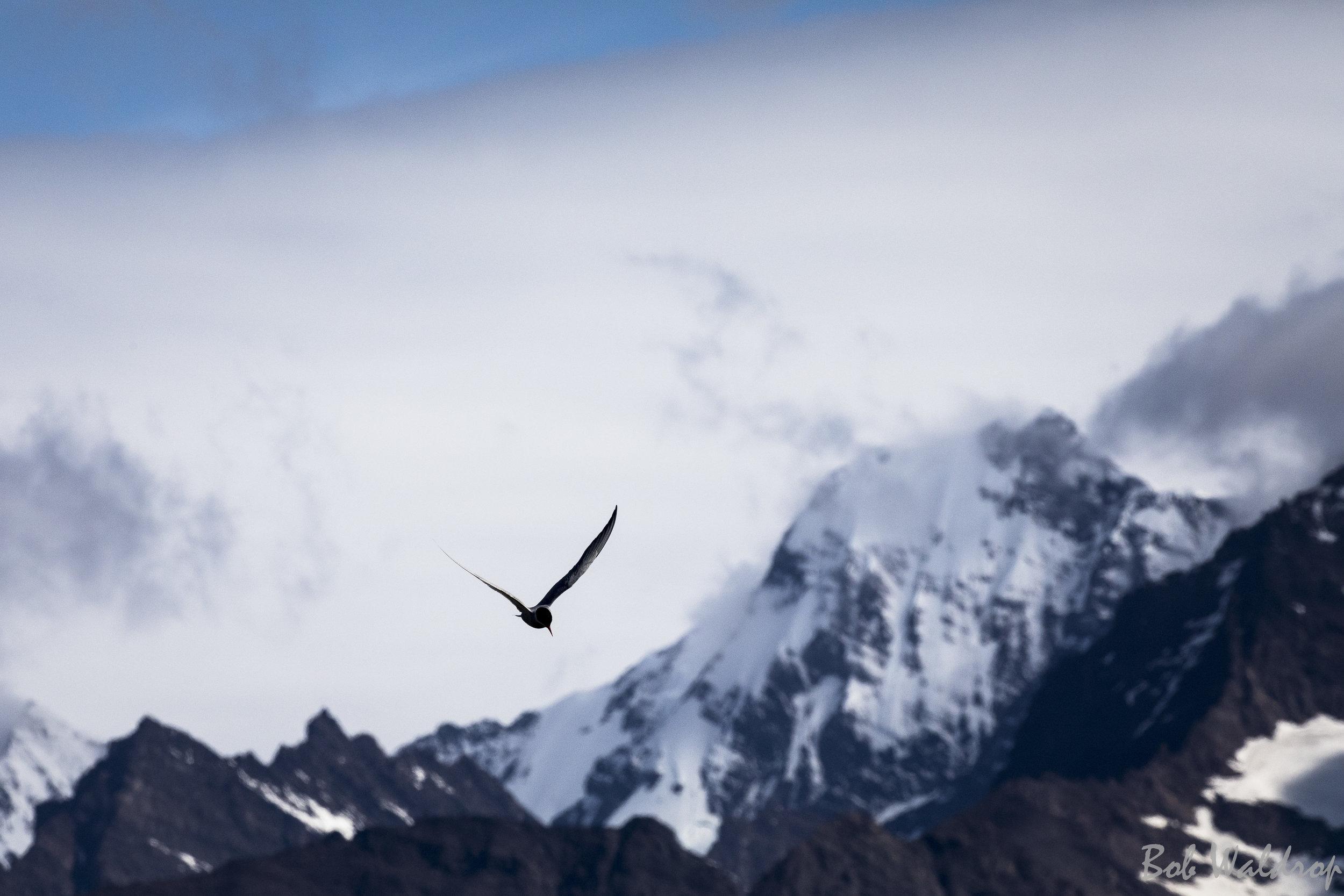 Antarctic-2505.JPG