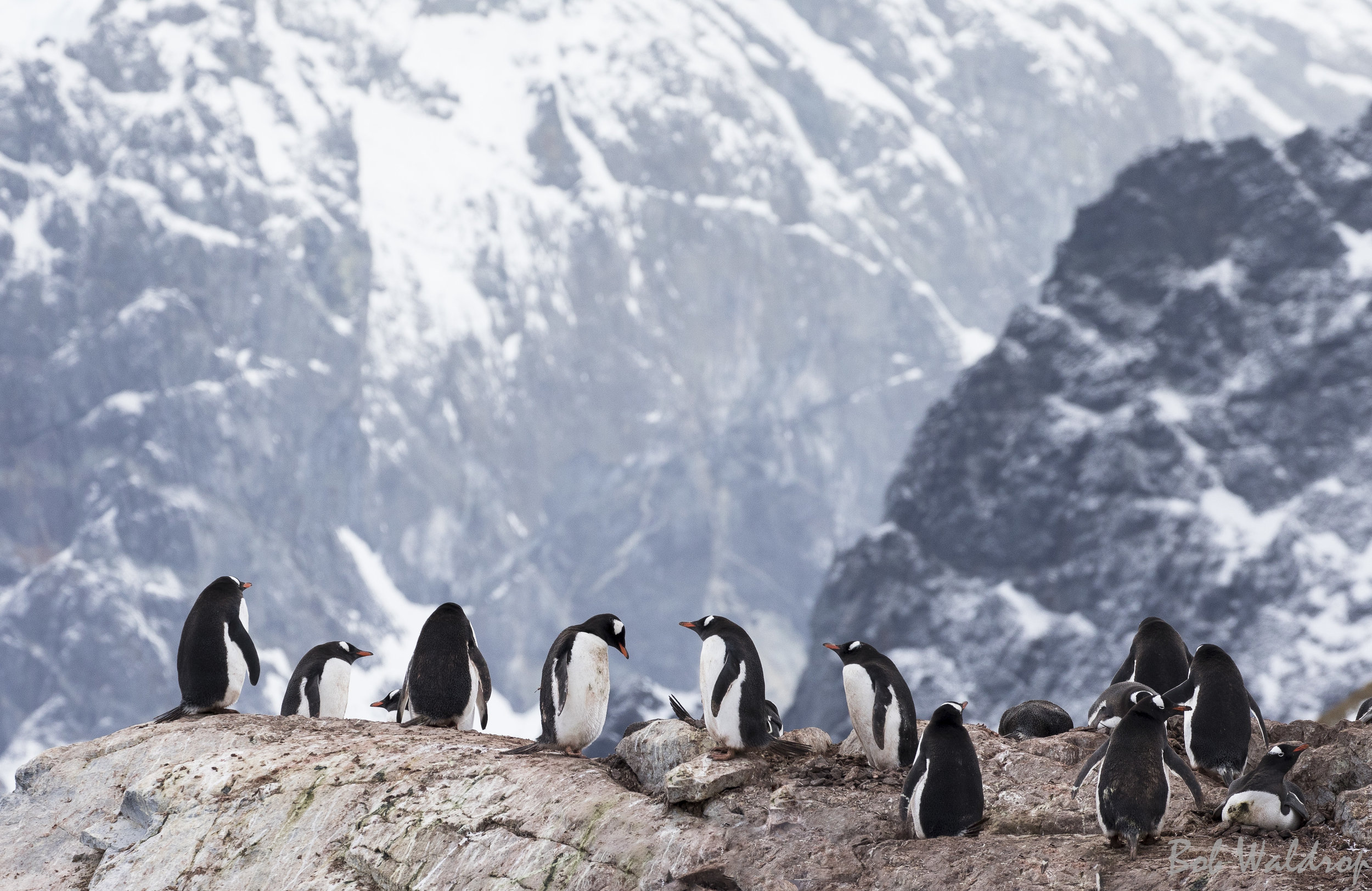 Antarctica-6161-Edit.JPG