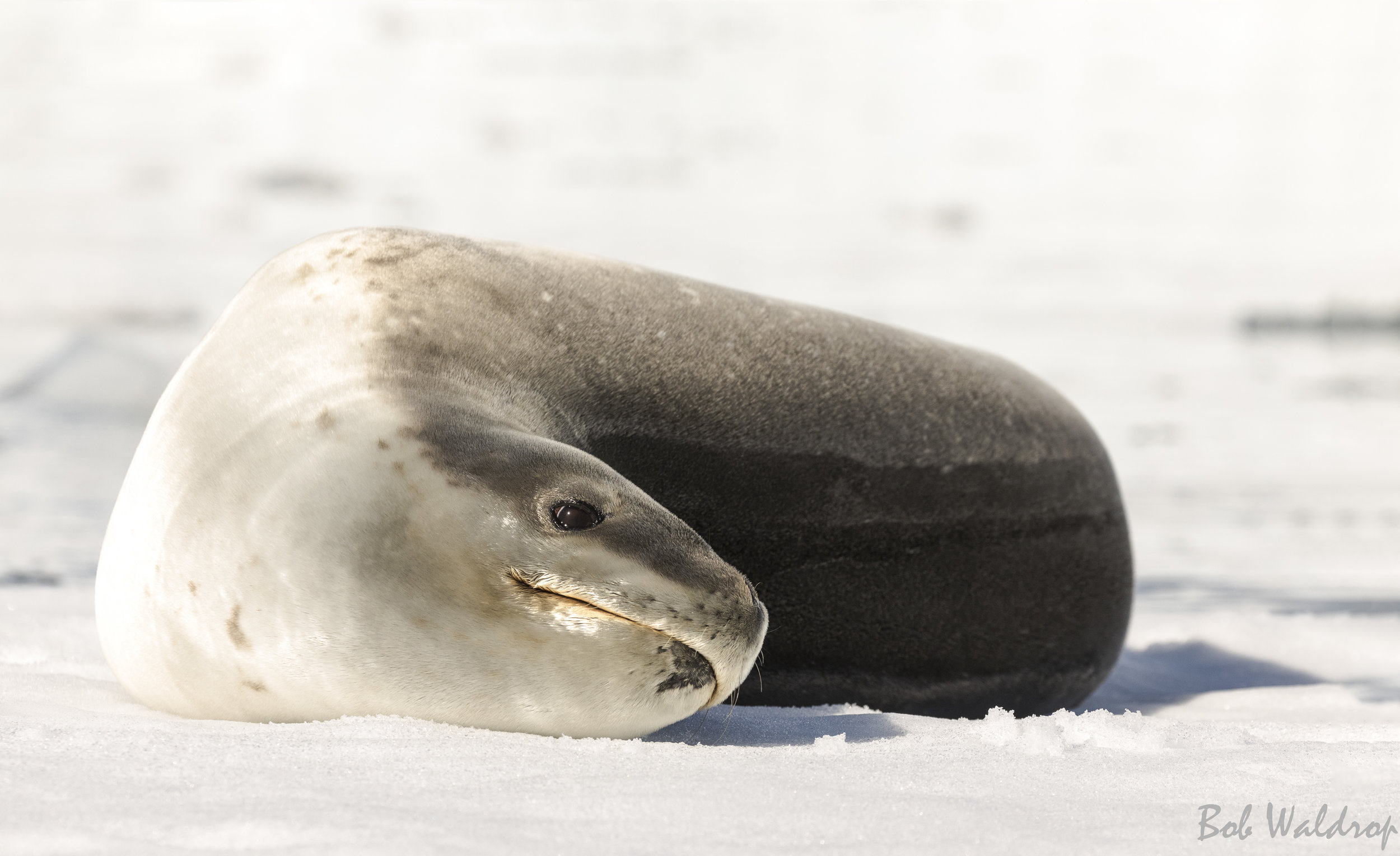 Antarctica-7422-3-Edit.JPG