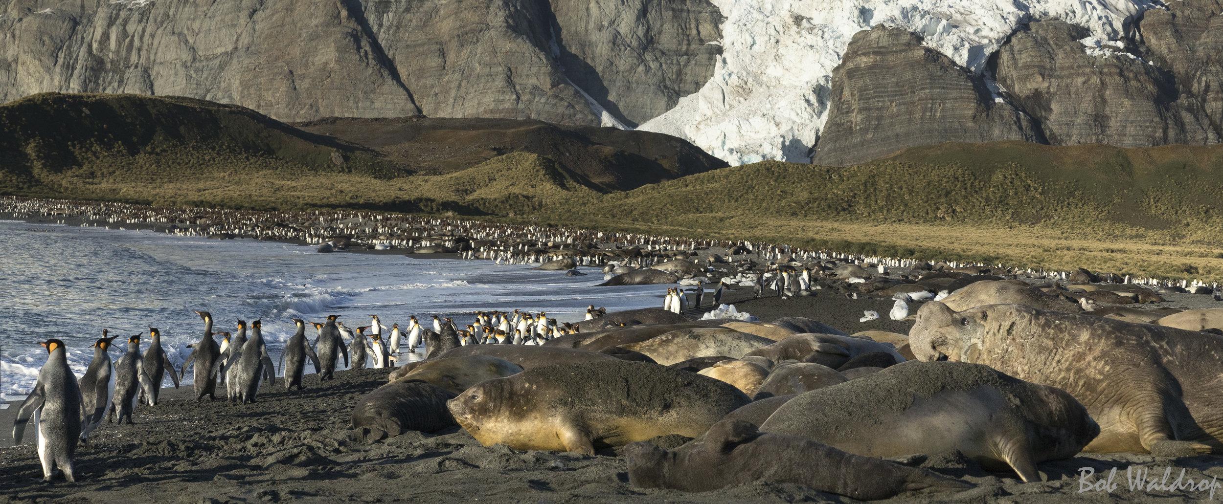 Antarctica-8043-Edit.JPG