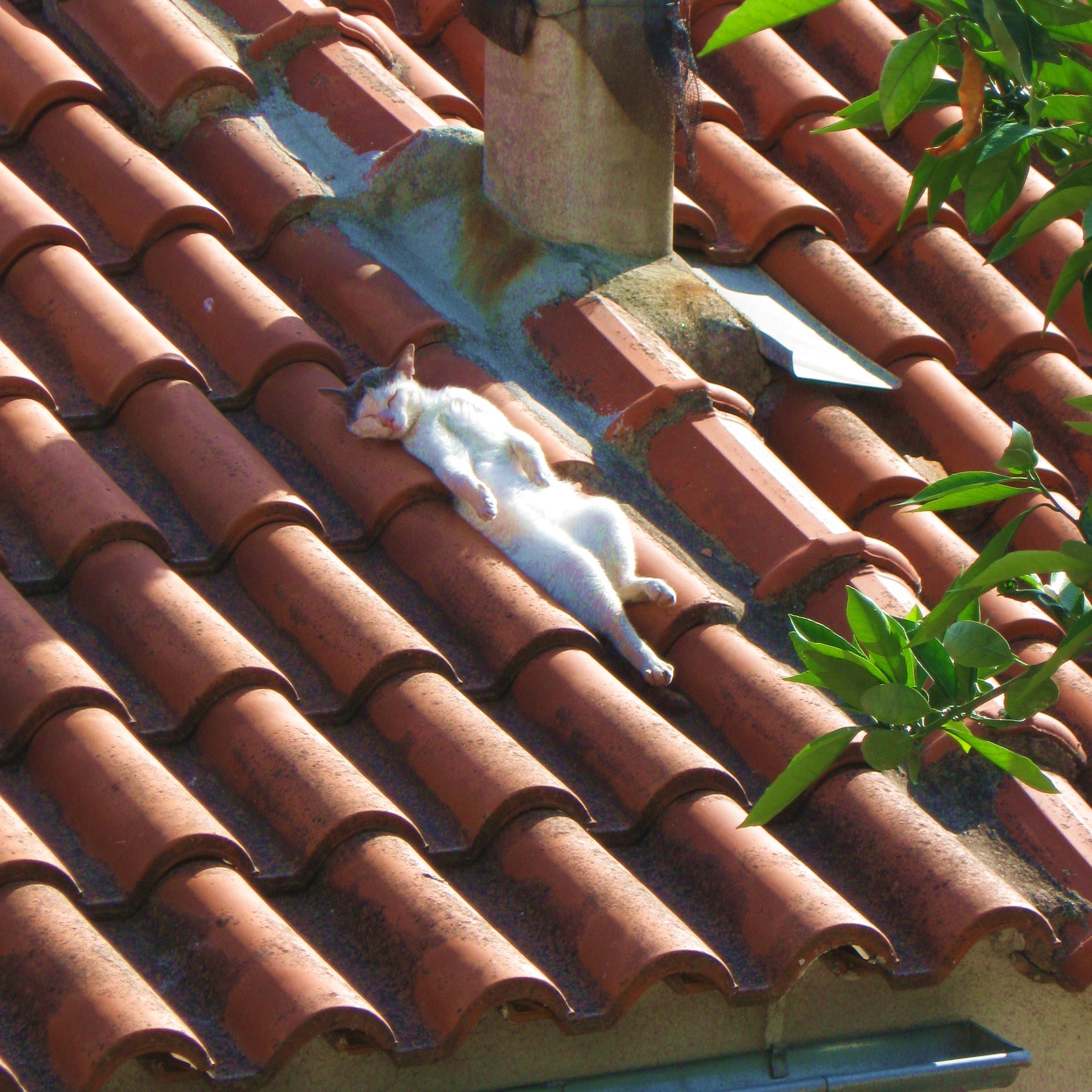 Cat on Hot Tiled Roof.jpg