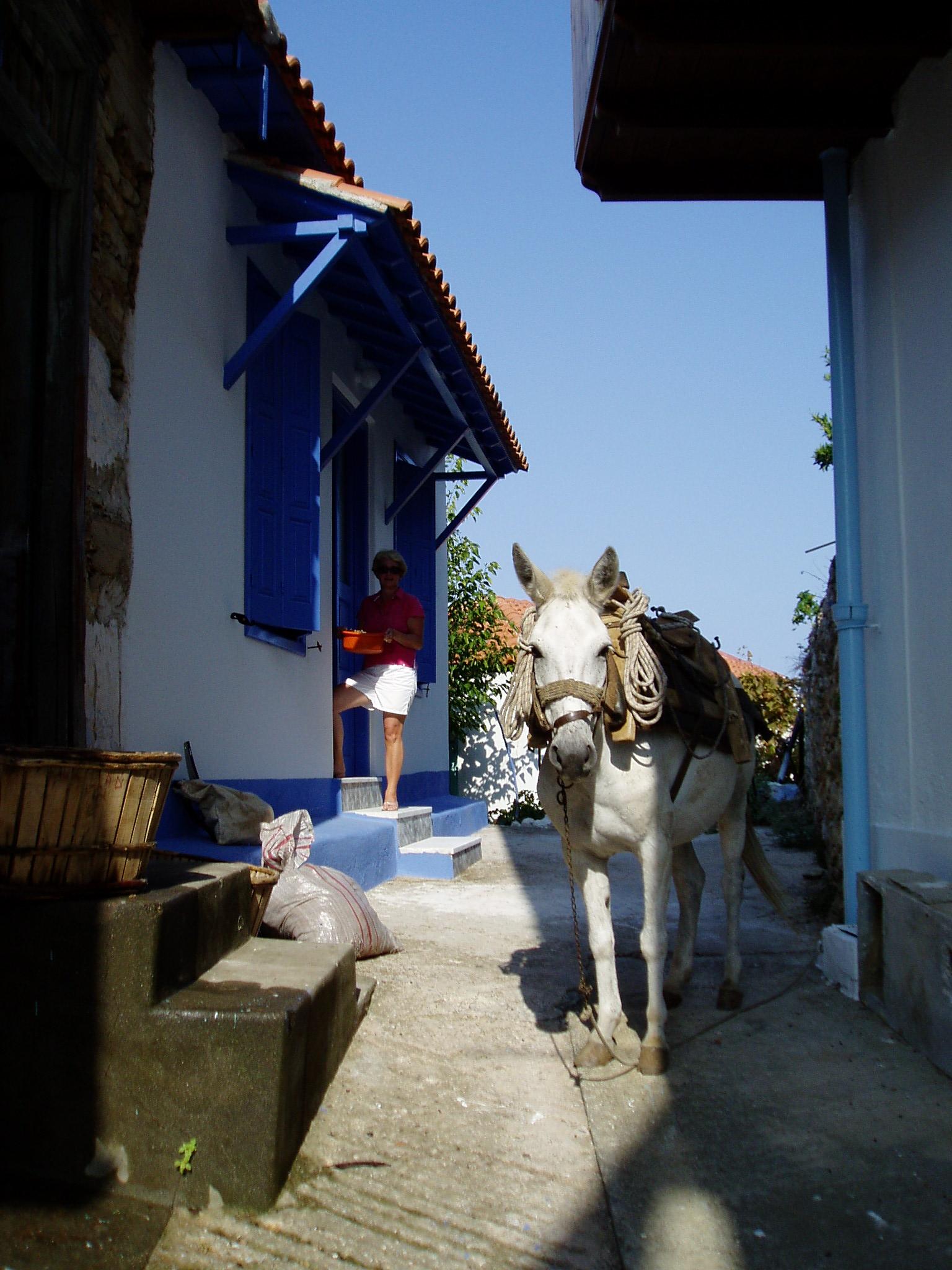 Donkey by Back Door.JPG