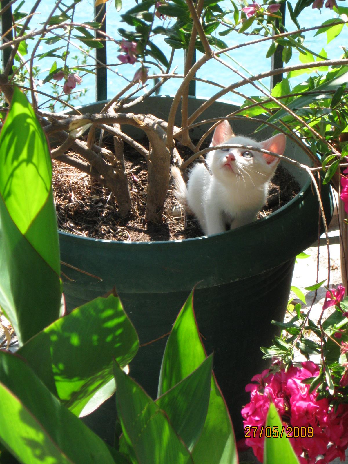 Glossa Kitten.JPG