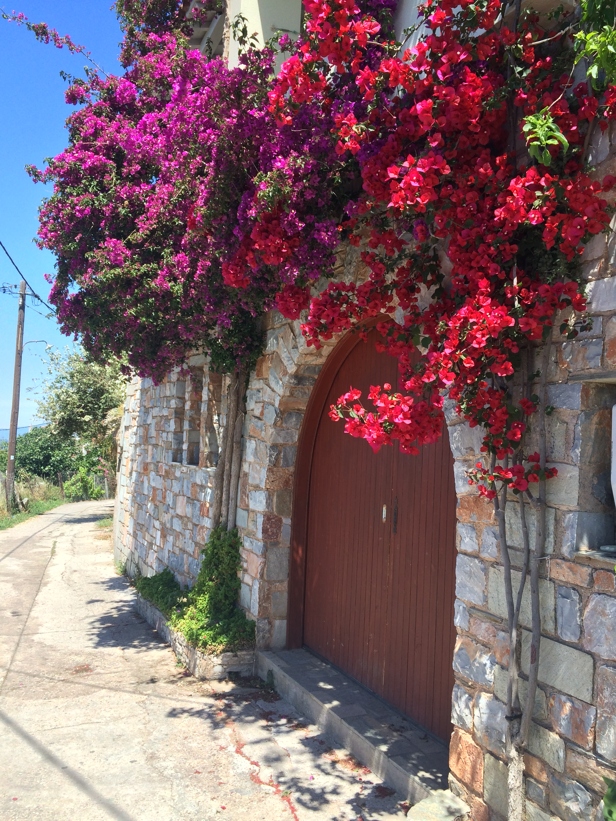 Beautiful flowers in the village of Glossa, where Eleni's House is situated.
