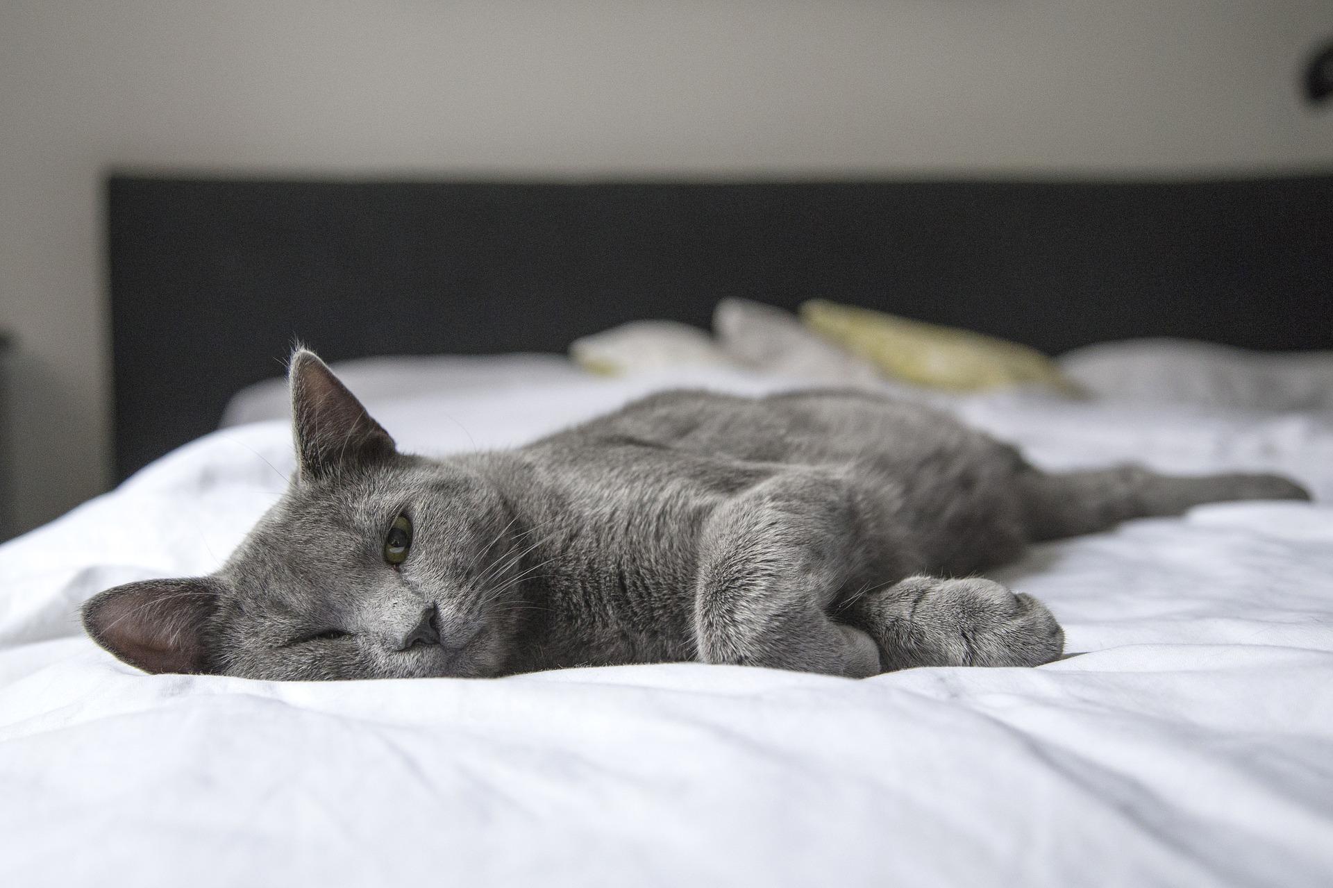 cat-1818927_1920.jpg