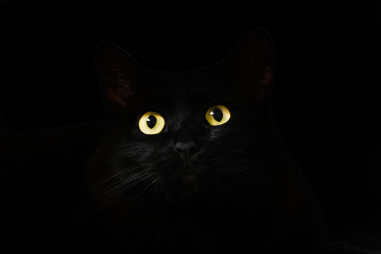 black-2944820_1280.jpg